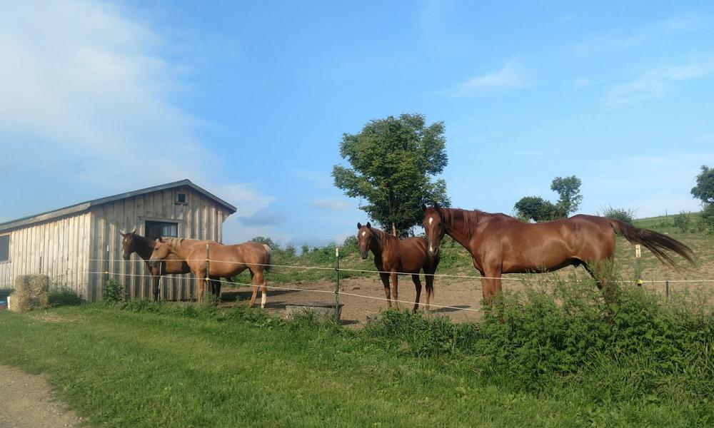 Peaceful Acres sanctuary in Amsterdam, New York State