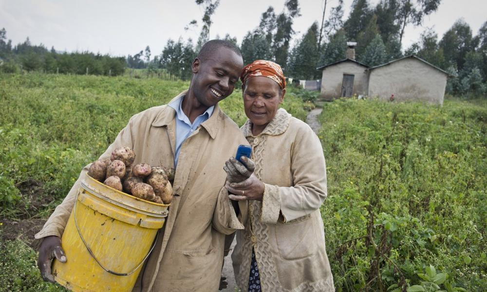 Farmers using the M-Farm solution.
