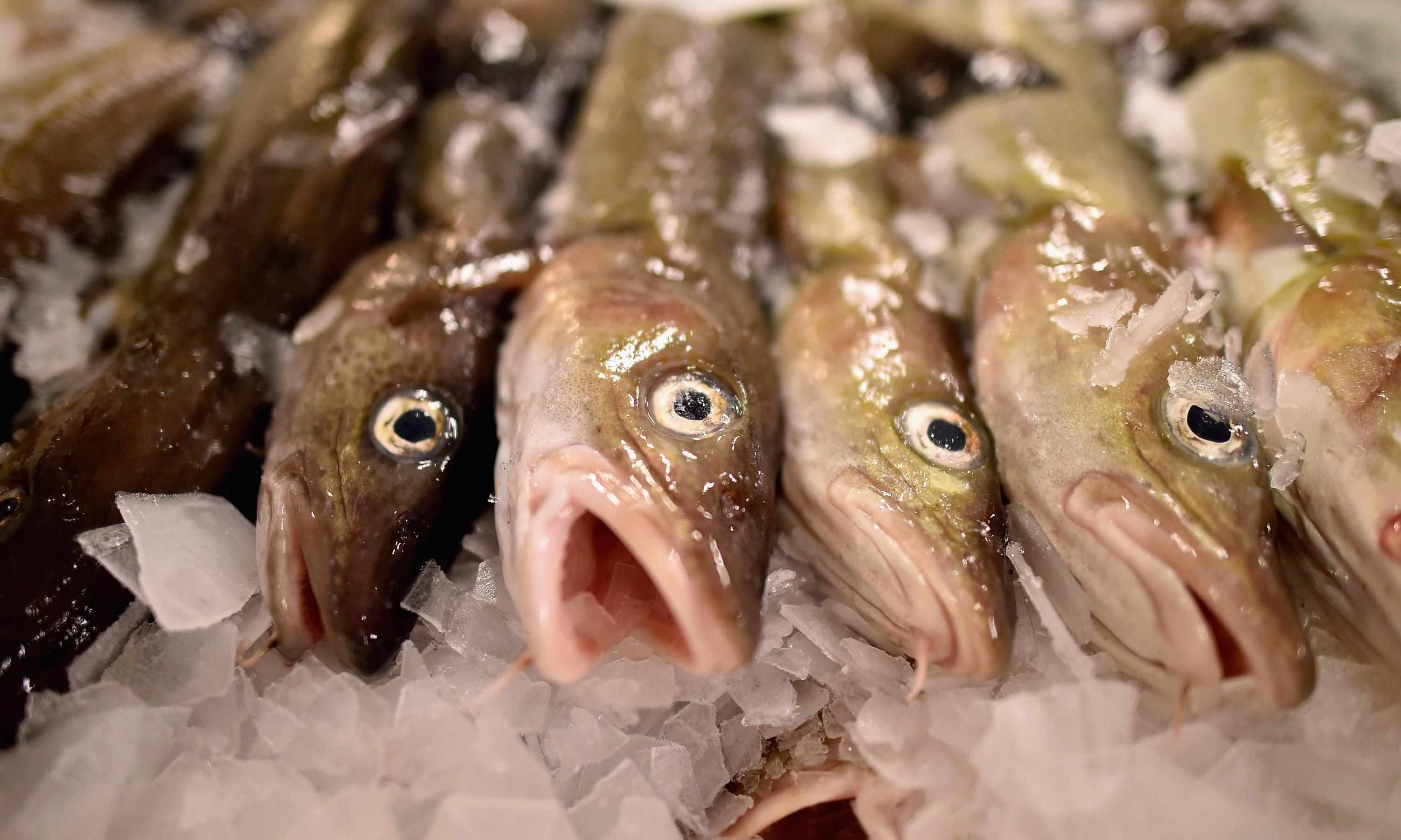 North Sea cod at critically low levels, study warns