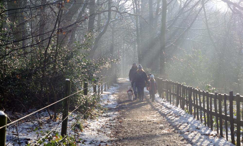 Walkers stroll through wintry woodlands in Nottinghamshire