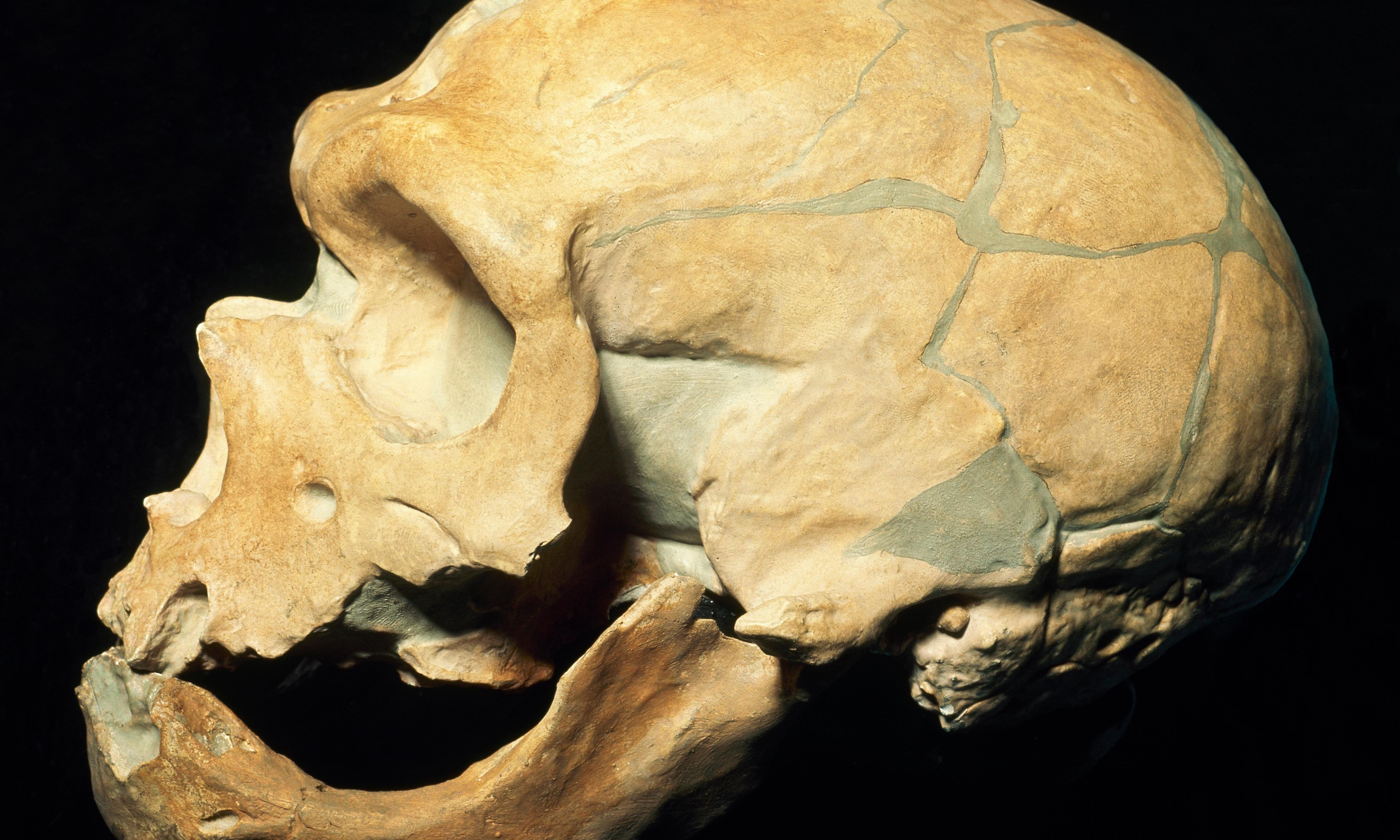 Neanderthal genes found for first time in African populations