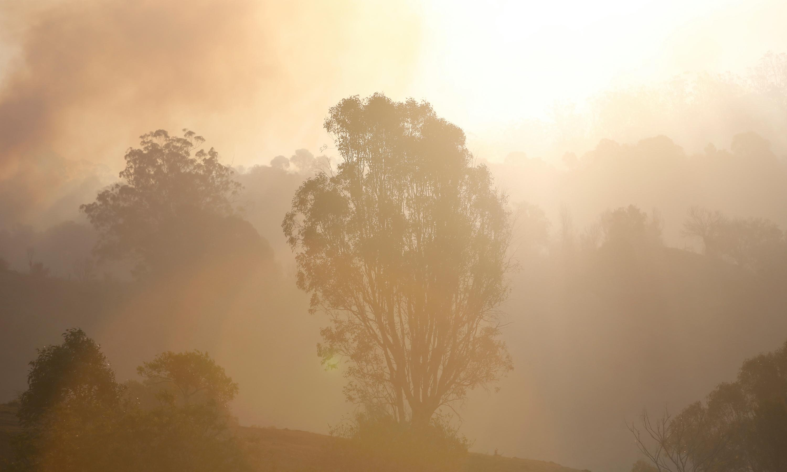 I never thought I'd see the Australian rainforest burning. What will it take for us to wake up to the climate crisis?