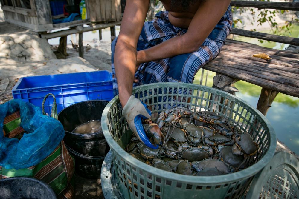 A man sorts crabs at the local fish market.