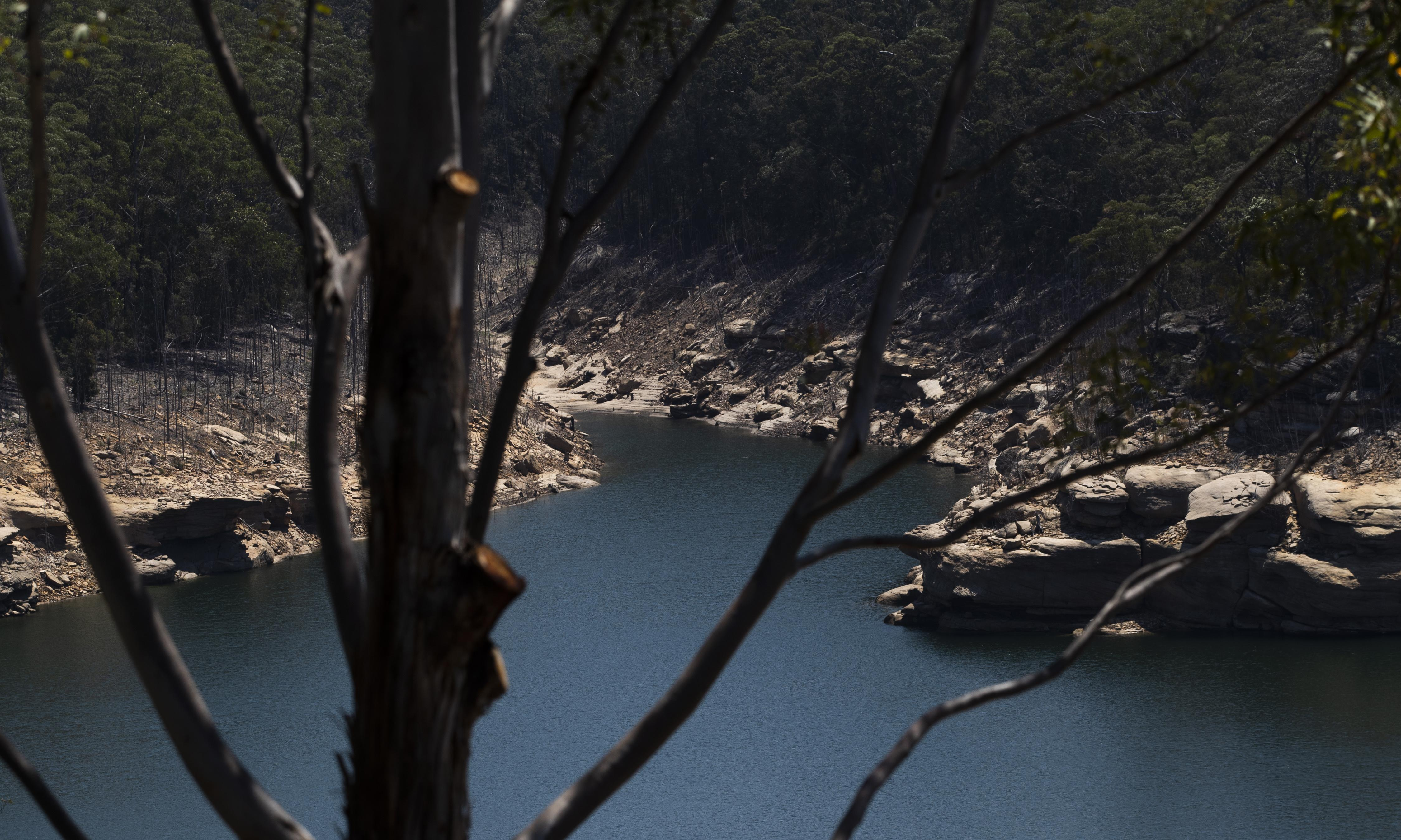 Sydney's drinking water could be polluted by bushfire ash in Warragamba Dam catchment, expert says
