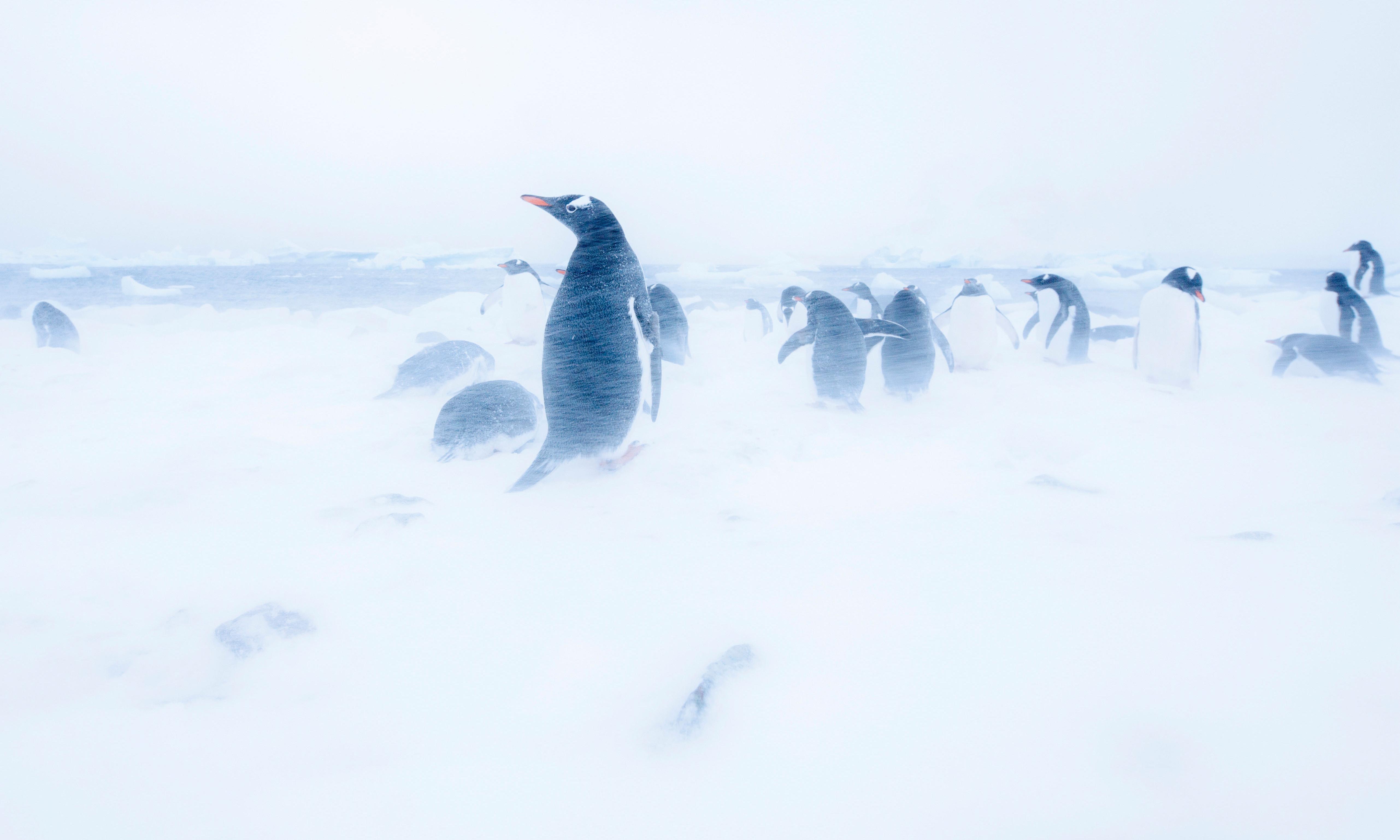 Manmade Antarctic snowstorm 'could save coastal cities from rising seas'