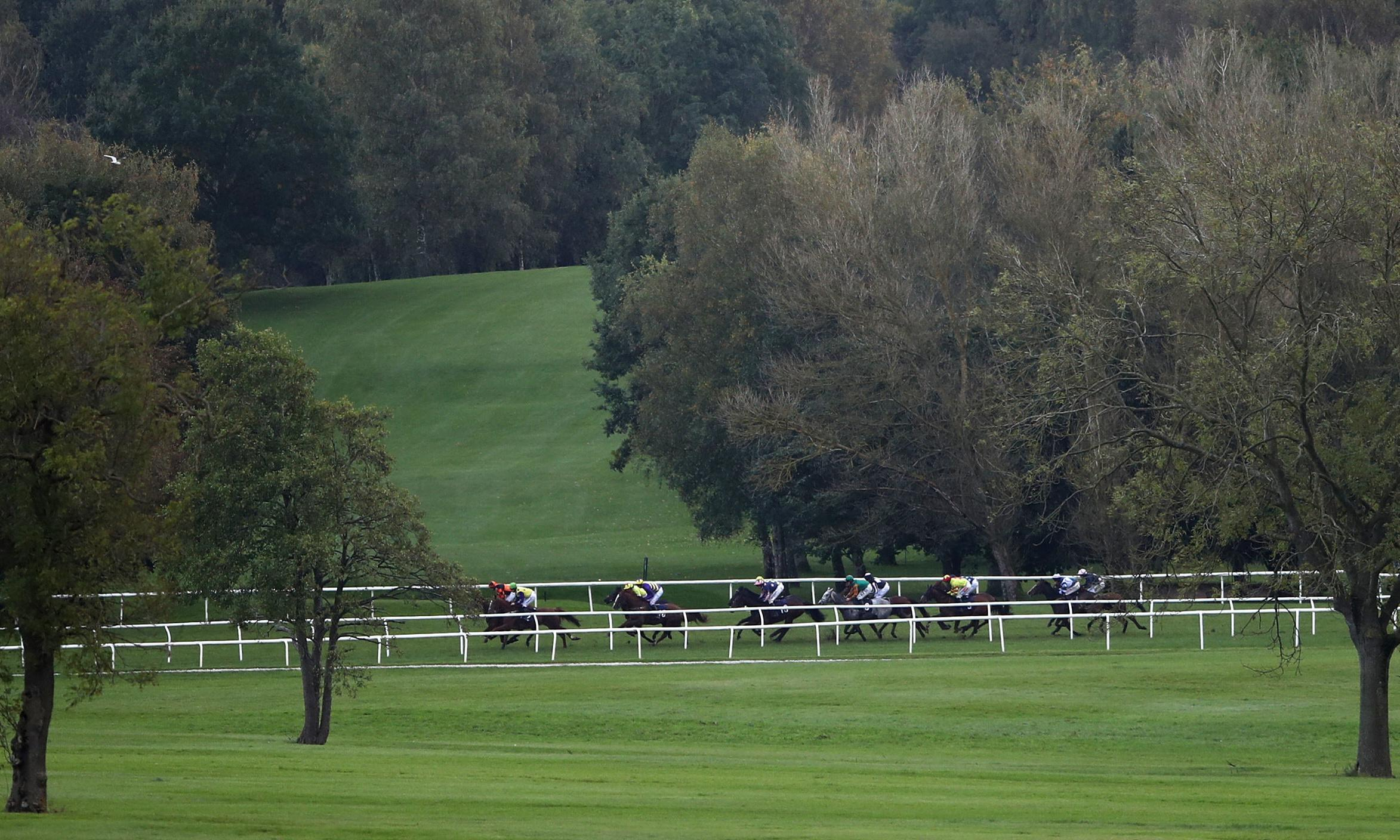 Talking Horses: a Nicky Henderson mare to watch at Uttoxeter