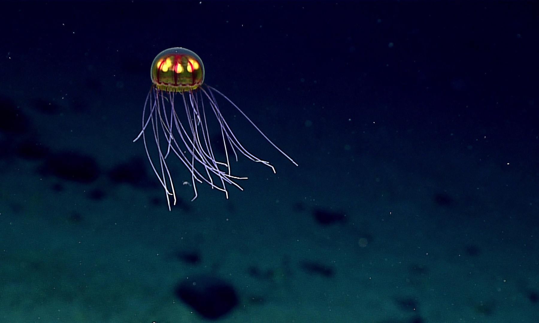 The Guardian view on deep sea exploration: murky waters ahead