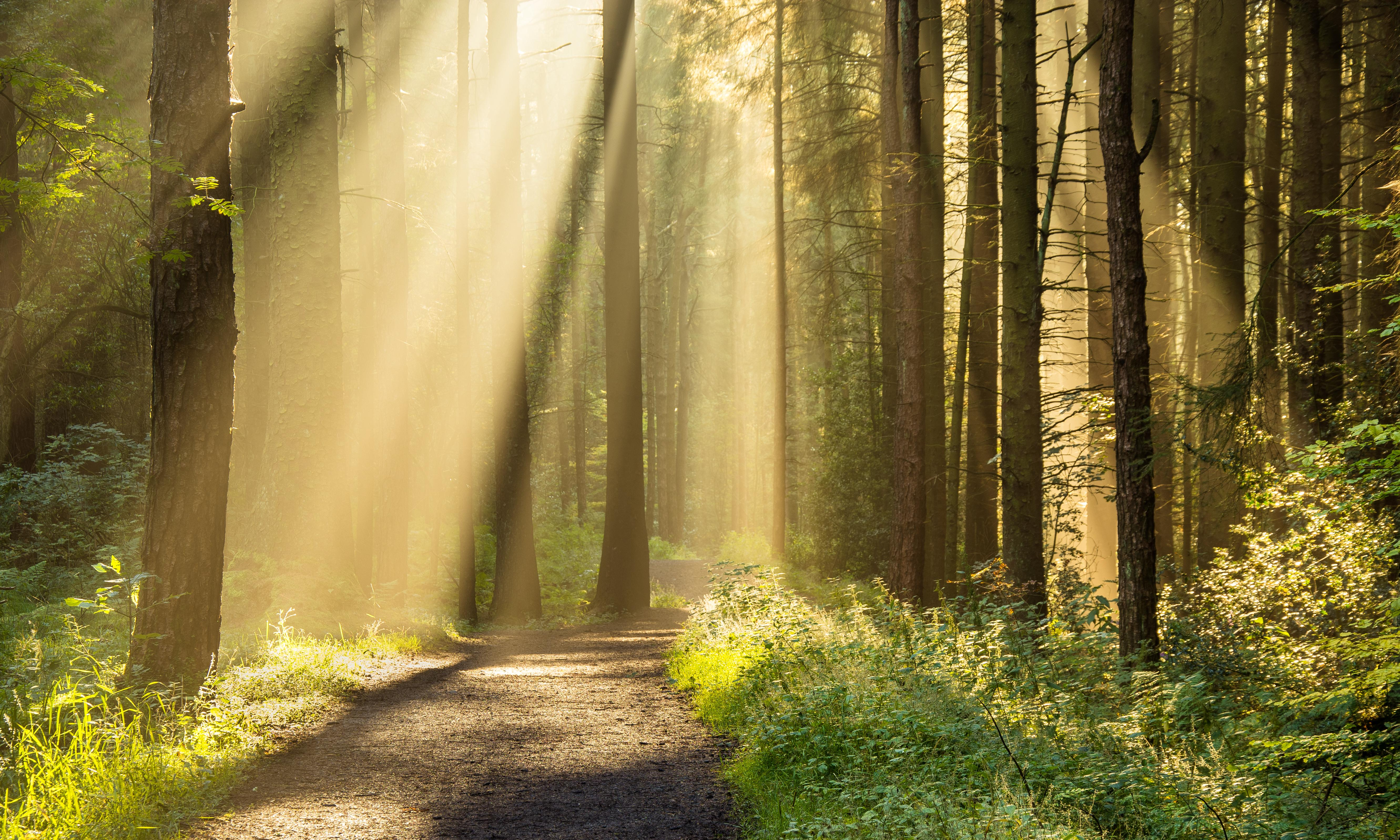 Trees of life: forest bathing blossoms in Britain