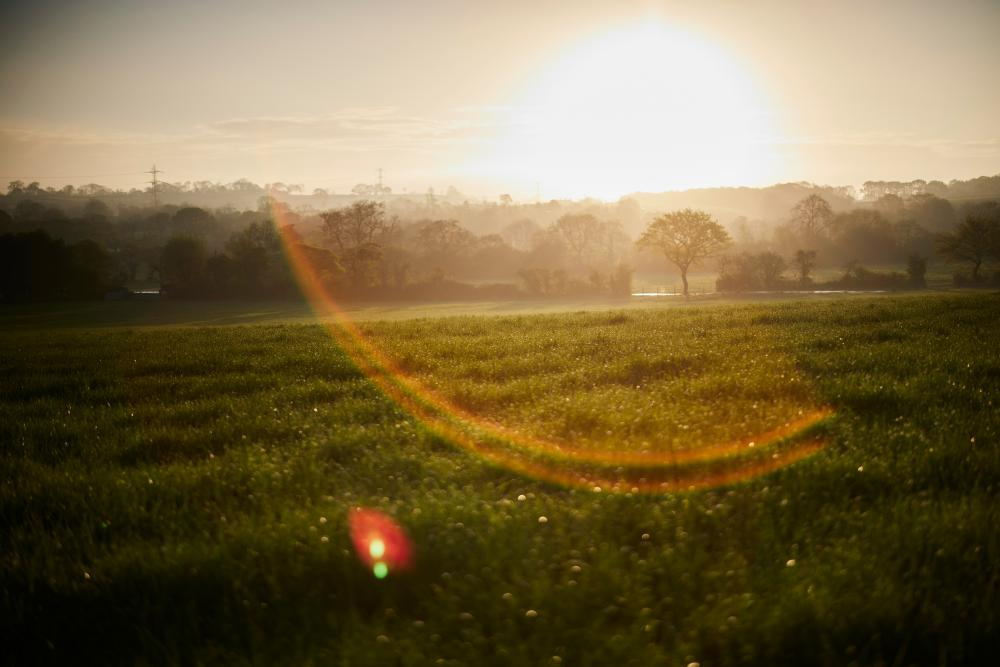 An early morning view of a field and track on Worthy Farm.