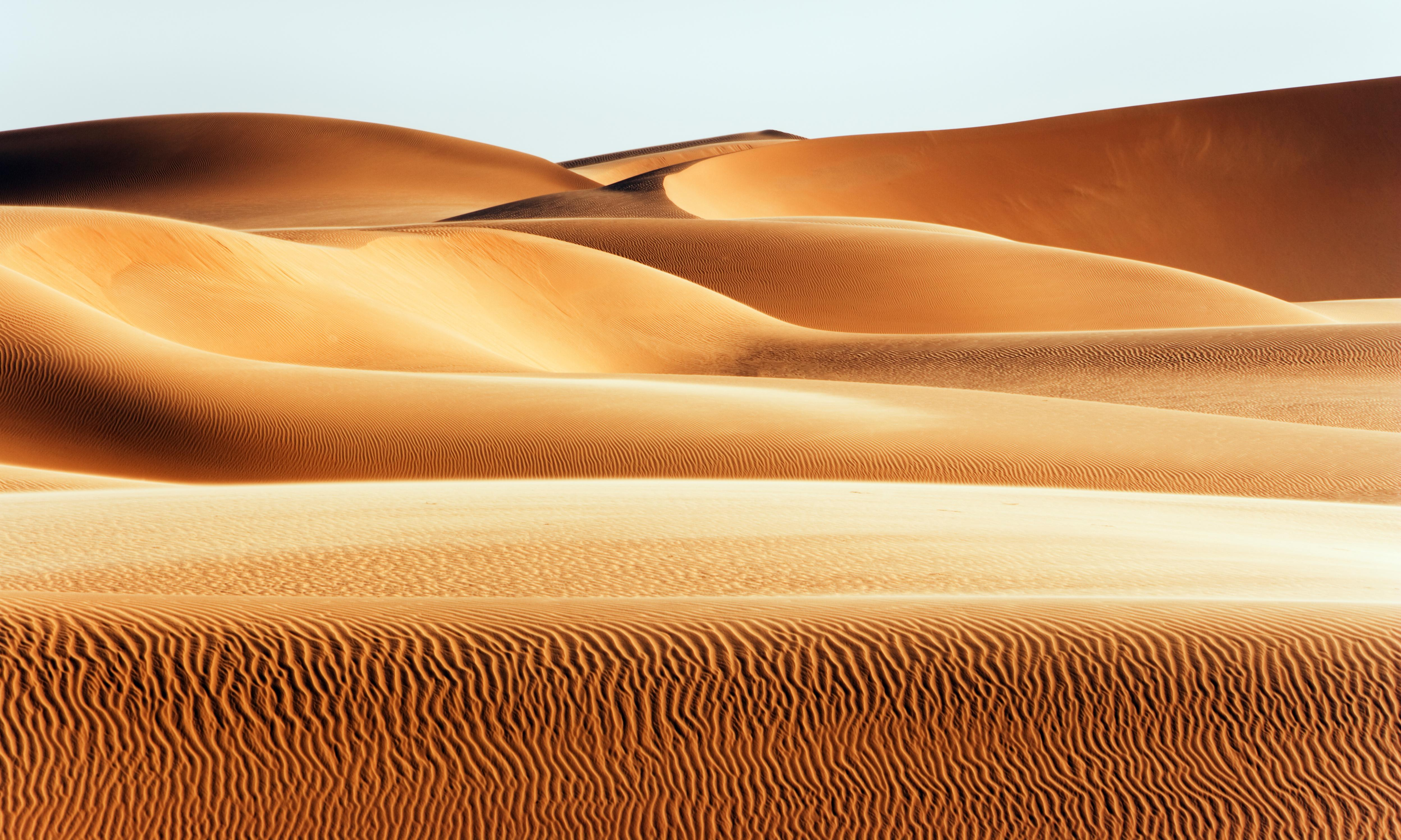 Ancient fish dinners chart Sahara's shift from savannah to desert
