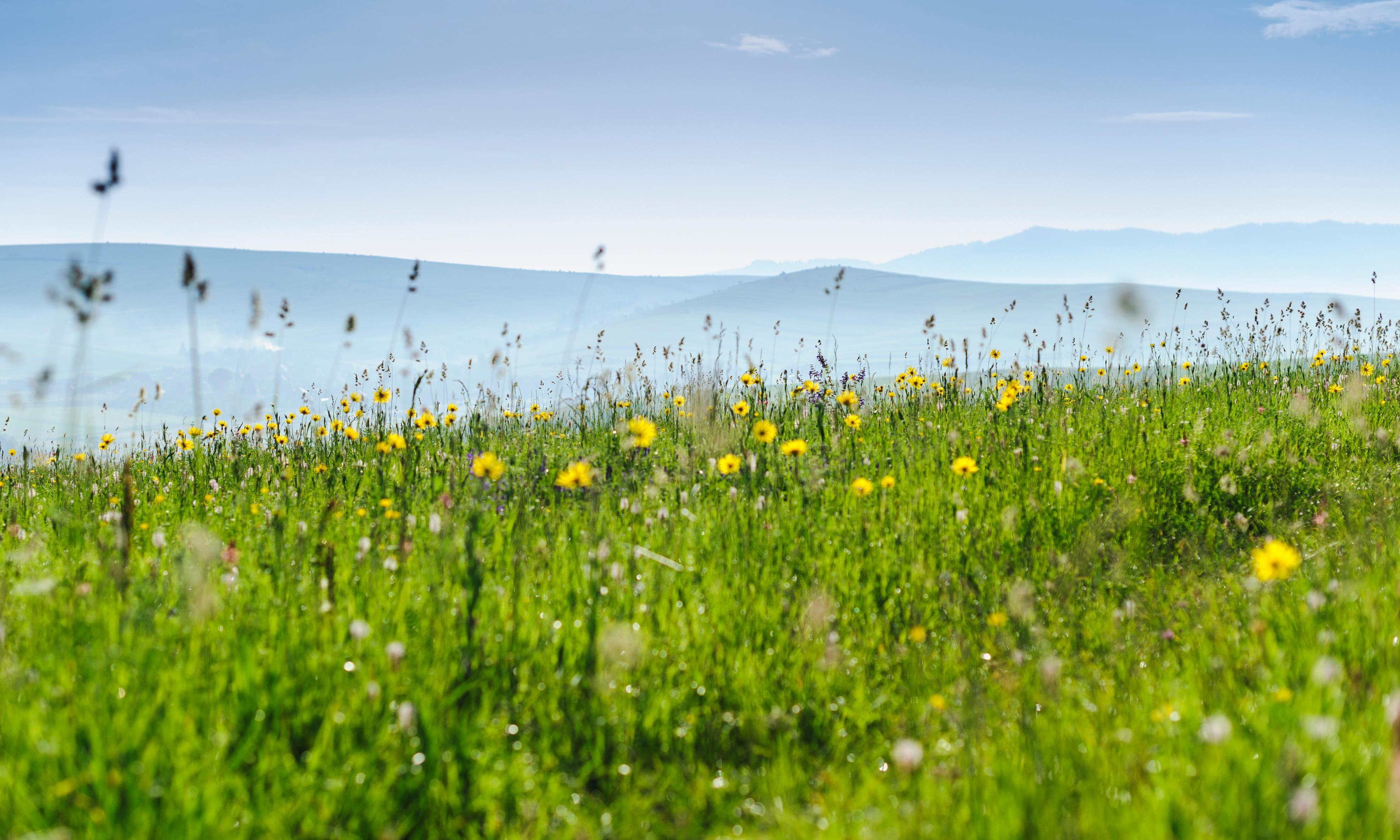 How to grow wildflowers