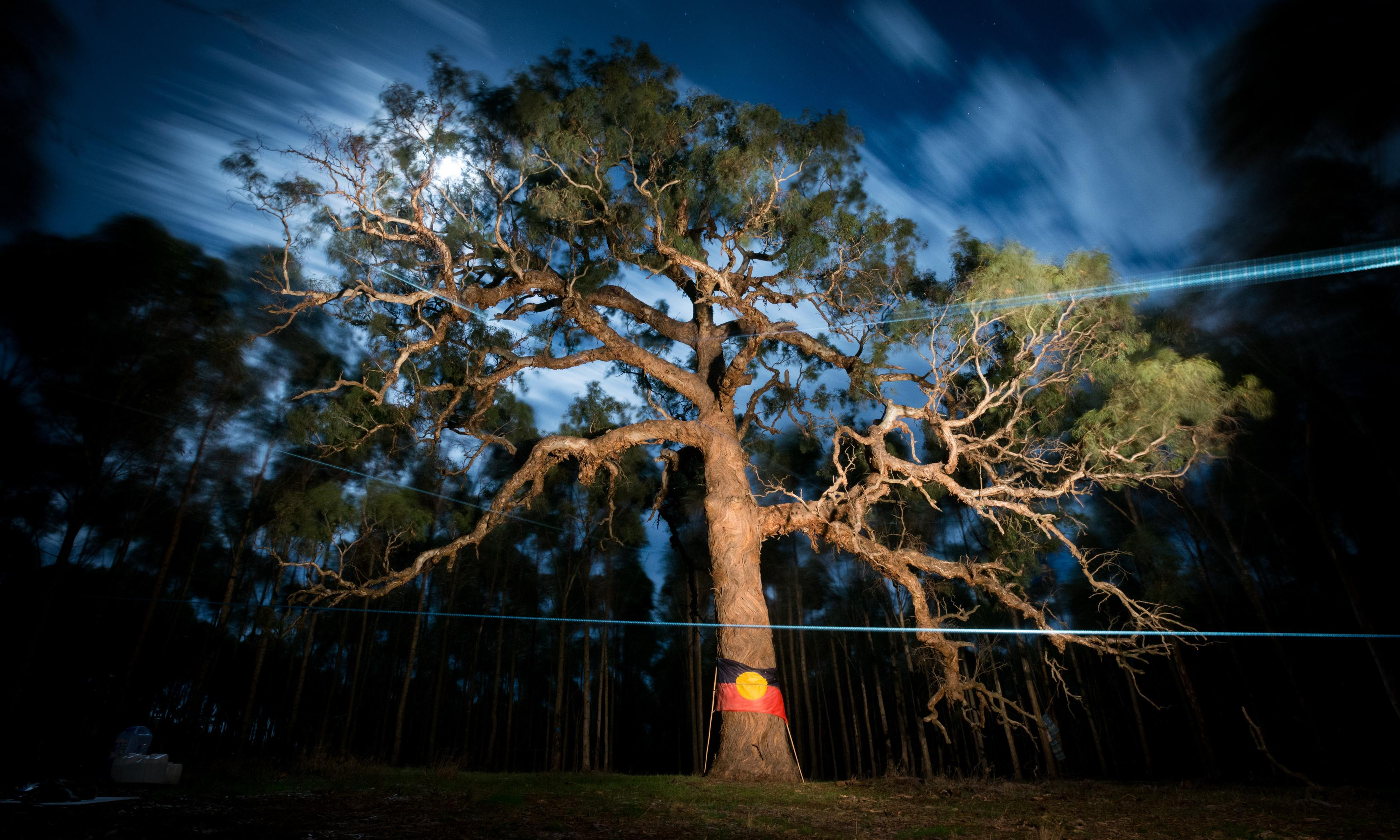 Protesters defend sacred 800-year-old Djap Wurrung trees as police deadline looms