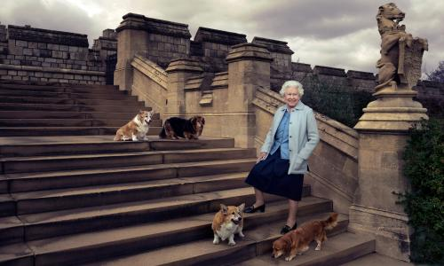 Queen Elizabeth II in the private grounds of Windsor Castle with four of her dogs: clockwise from top left Willow (corgi), Vulcan (dorgie), Candy (dorgie) and Holly (corgi)