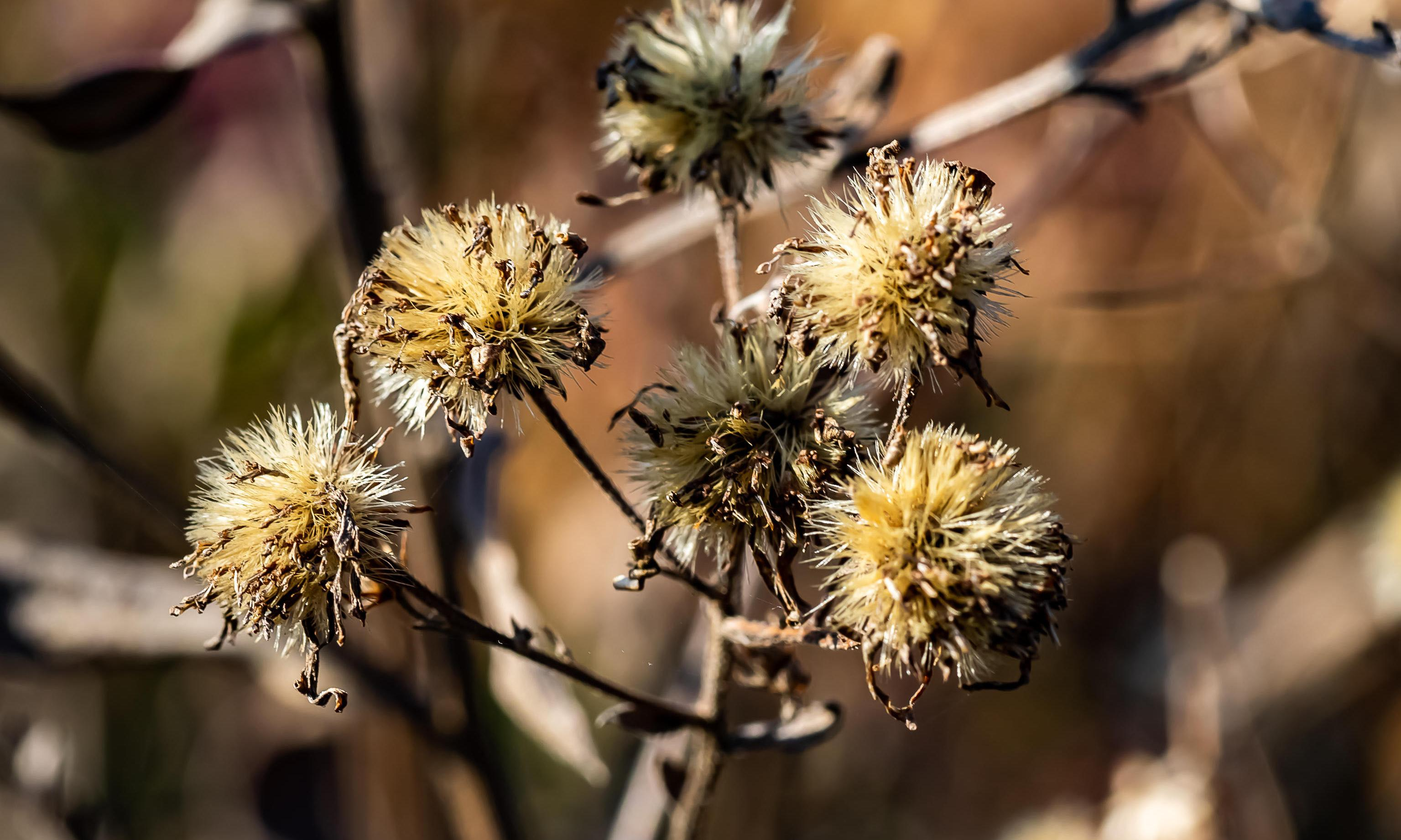 Poem of the week: Wildflower Meadow, Medawisla by Stephanie Burt
