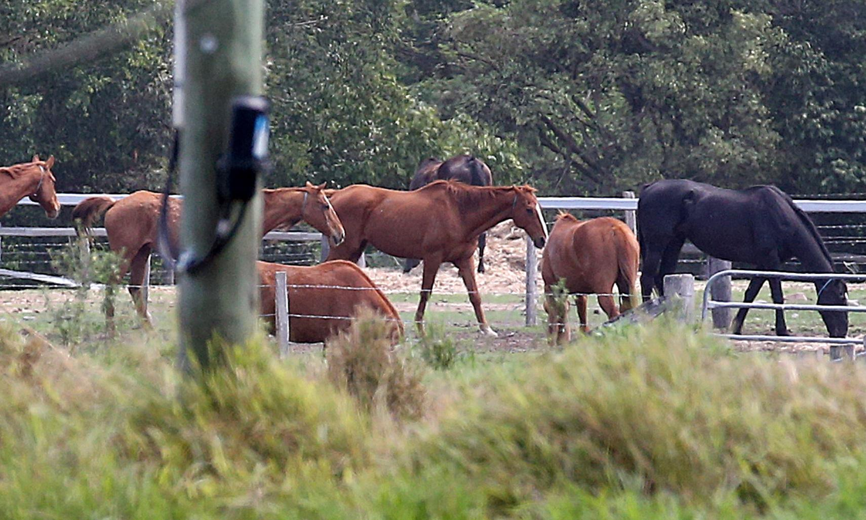 Vet at Queensland horse abattoir made nine animal welfare reports this year