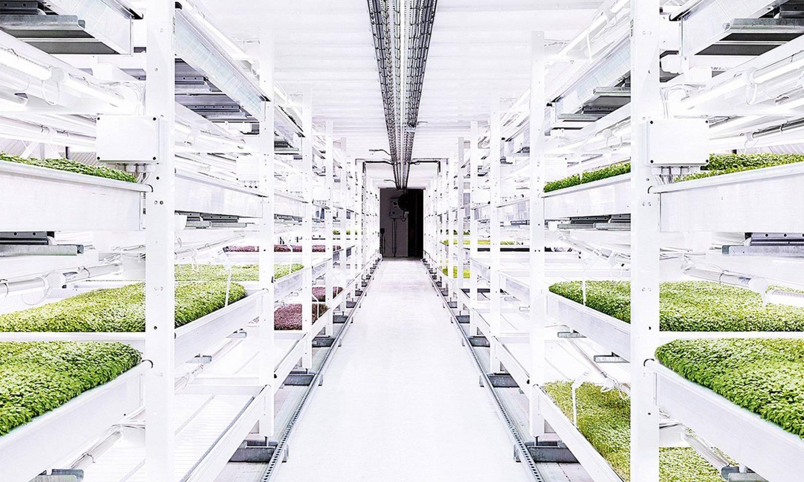 On rooftops and in tunnels, city farms lead food revolution