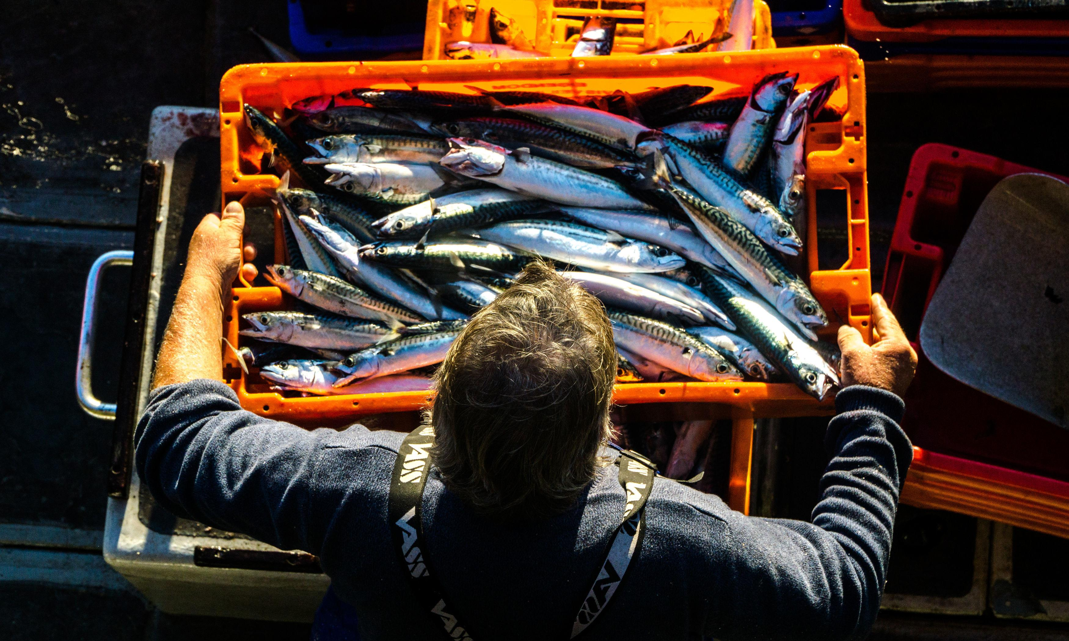 Iceland accused of putting mackerel stocks at risk by increasing its catch
