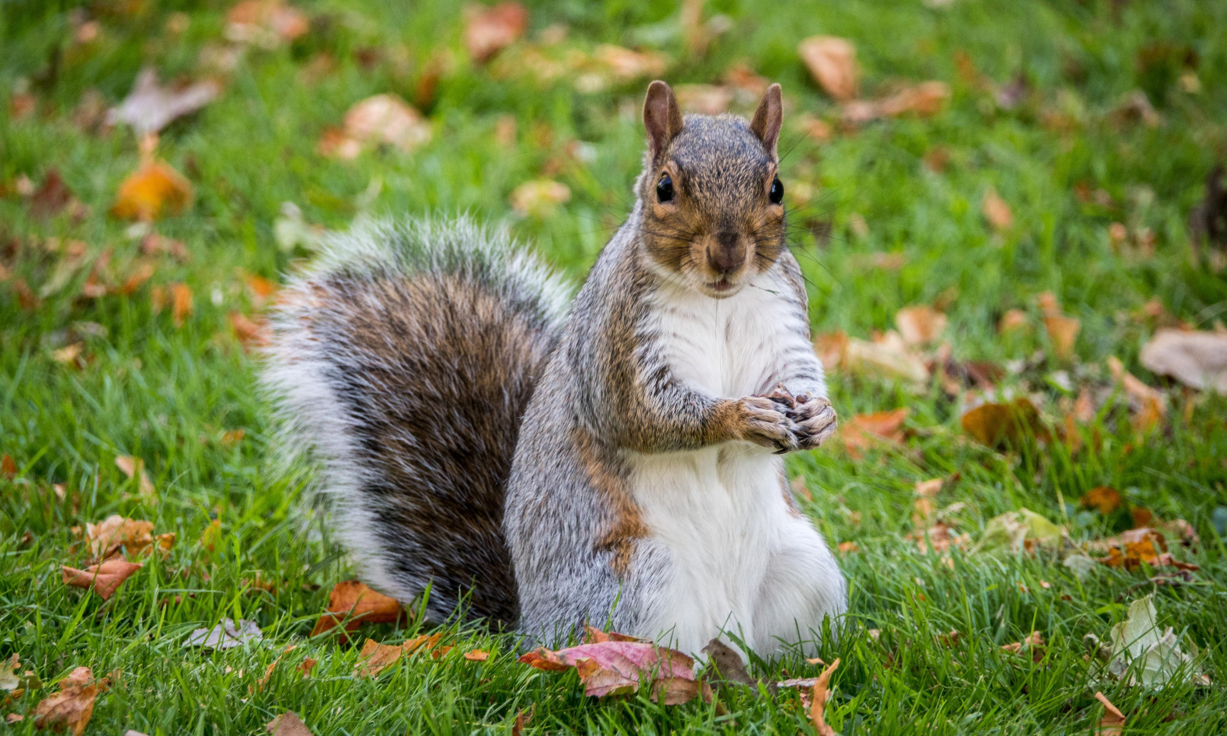 Alabama man accused of feeding caged 'attack squirrel' meth