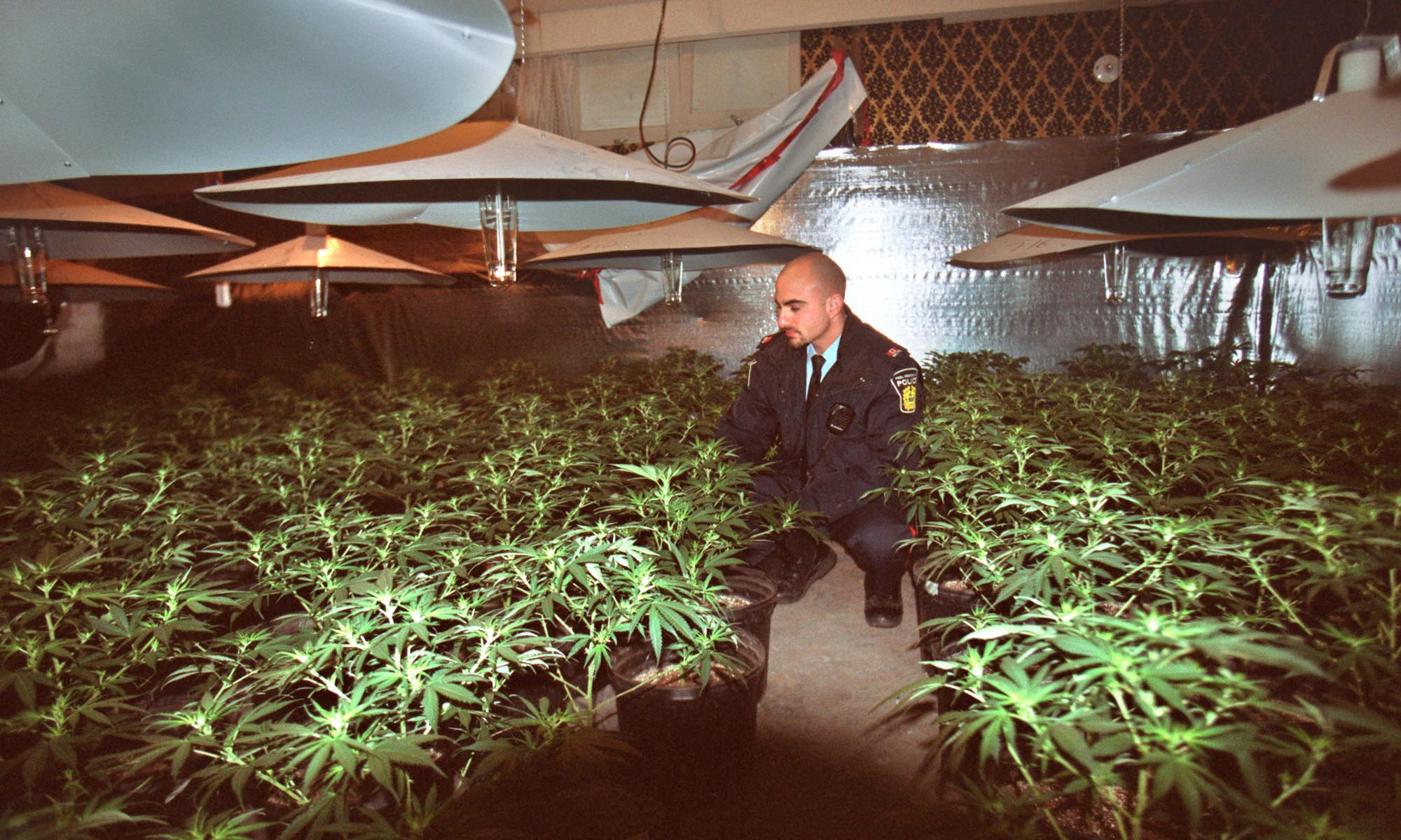 I served 20 years for cannabis. Now the police are cashing in on it
