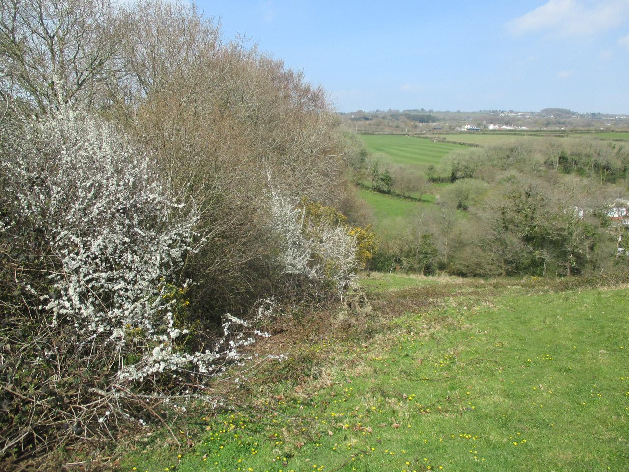 Country diary: wild flowers continue their spring advance