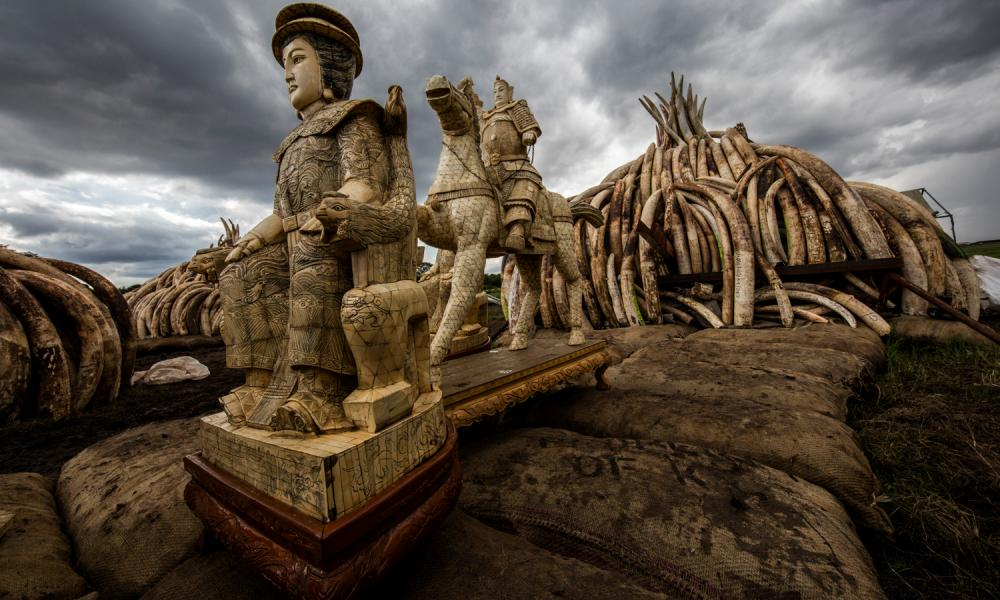 Ivory carvings handed in to Kenya Wildlife Service to be burned along with the country's ivory stockpile on 30 April 2016.