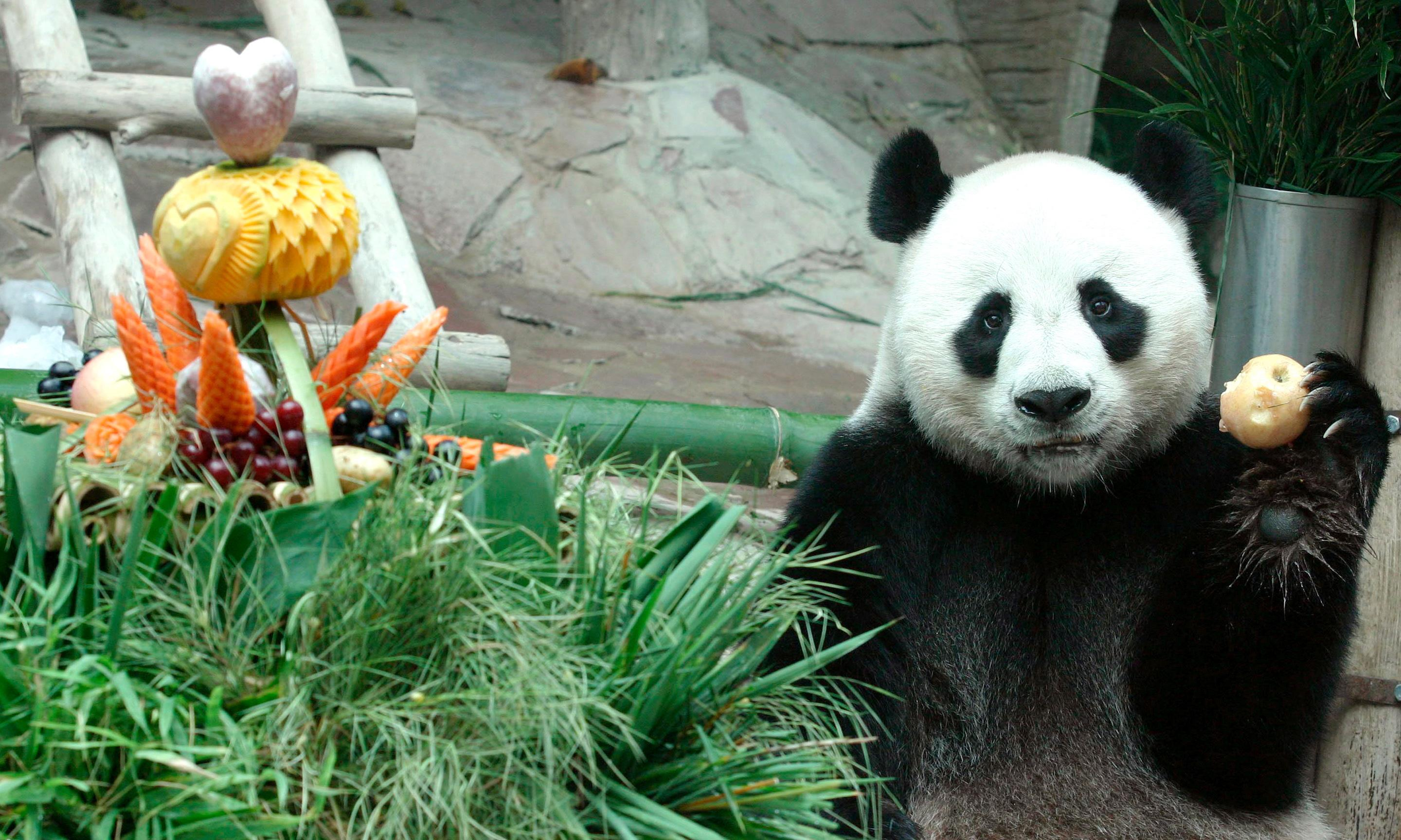 Outrage in China as giant panda on loan to Thailand zoo dies