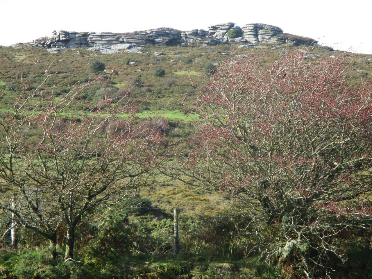 Country diary: ferns, mosses and lichens thrive in the damp