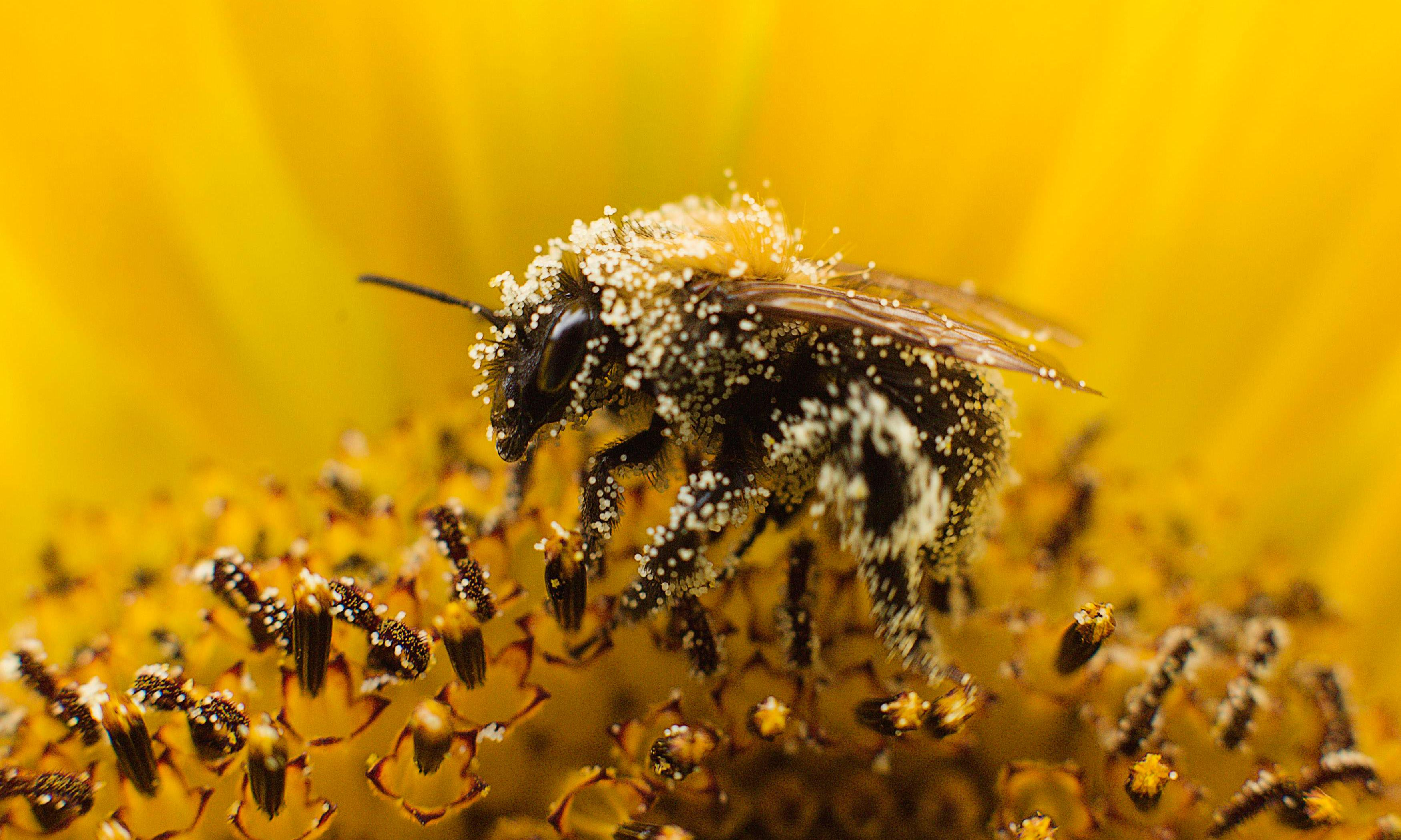 Scientist unveils blueprint to save bees and enrich farmers