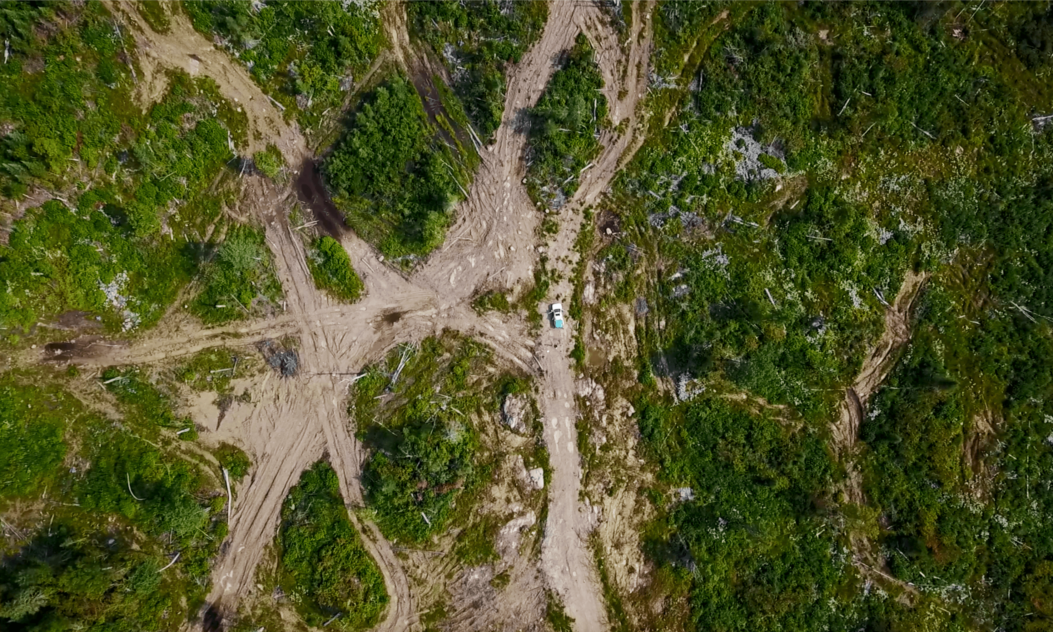 Long-term damage from logging hits ability of Canada's forests to regenerate
