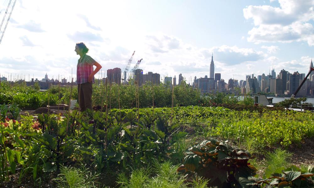 A farmer surveys her produce in New York, where there are an estimated 700 urban farming areas.