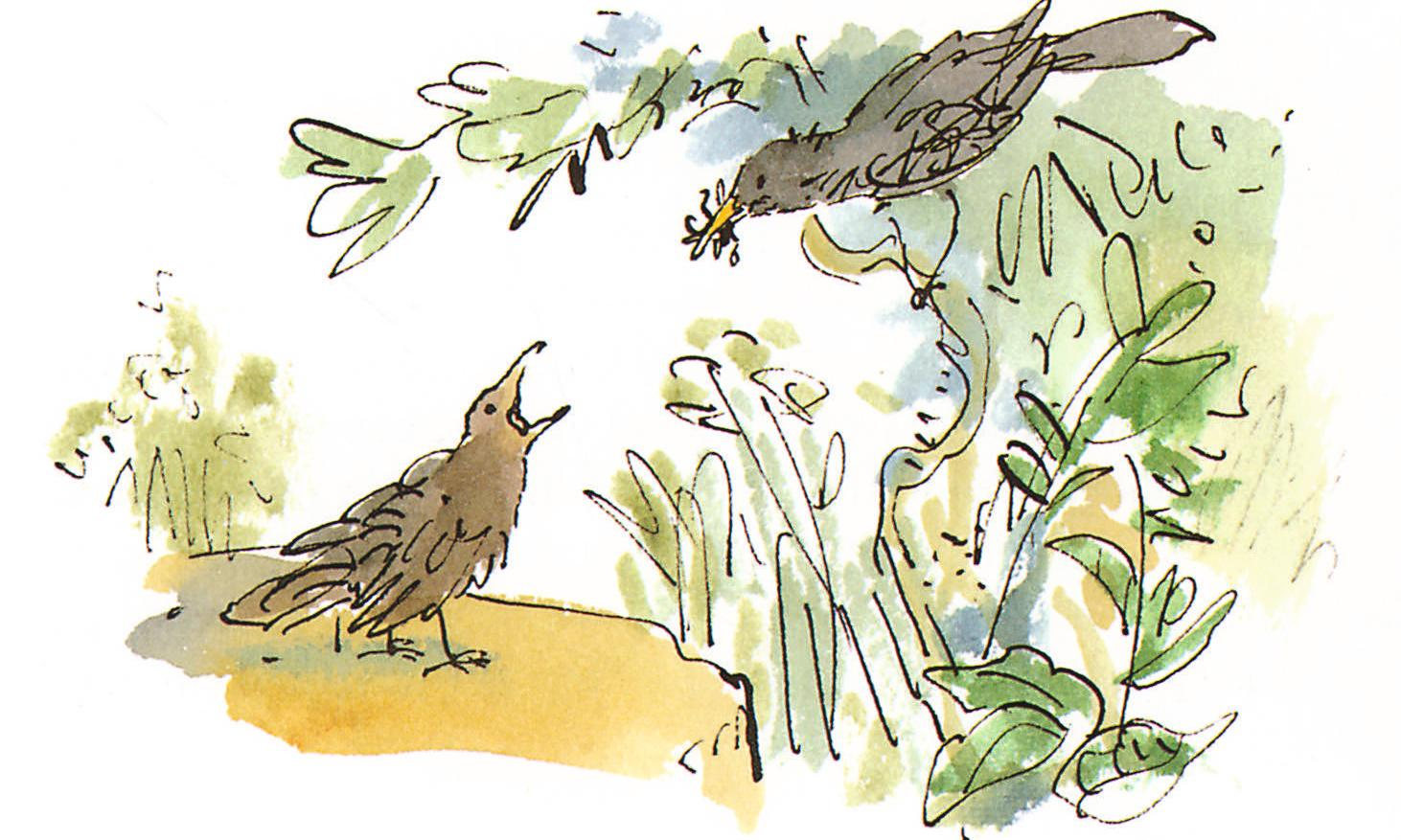 Roald Dahl's nature journal My Year republished after decades out of print