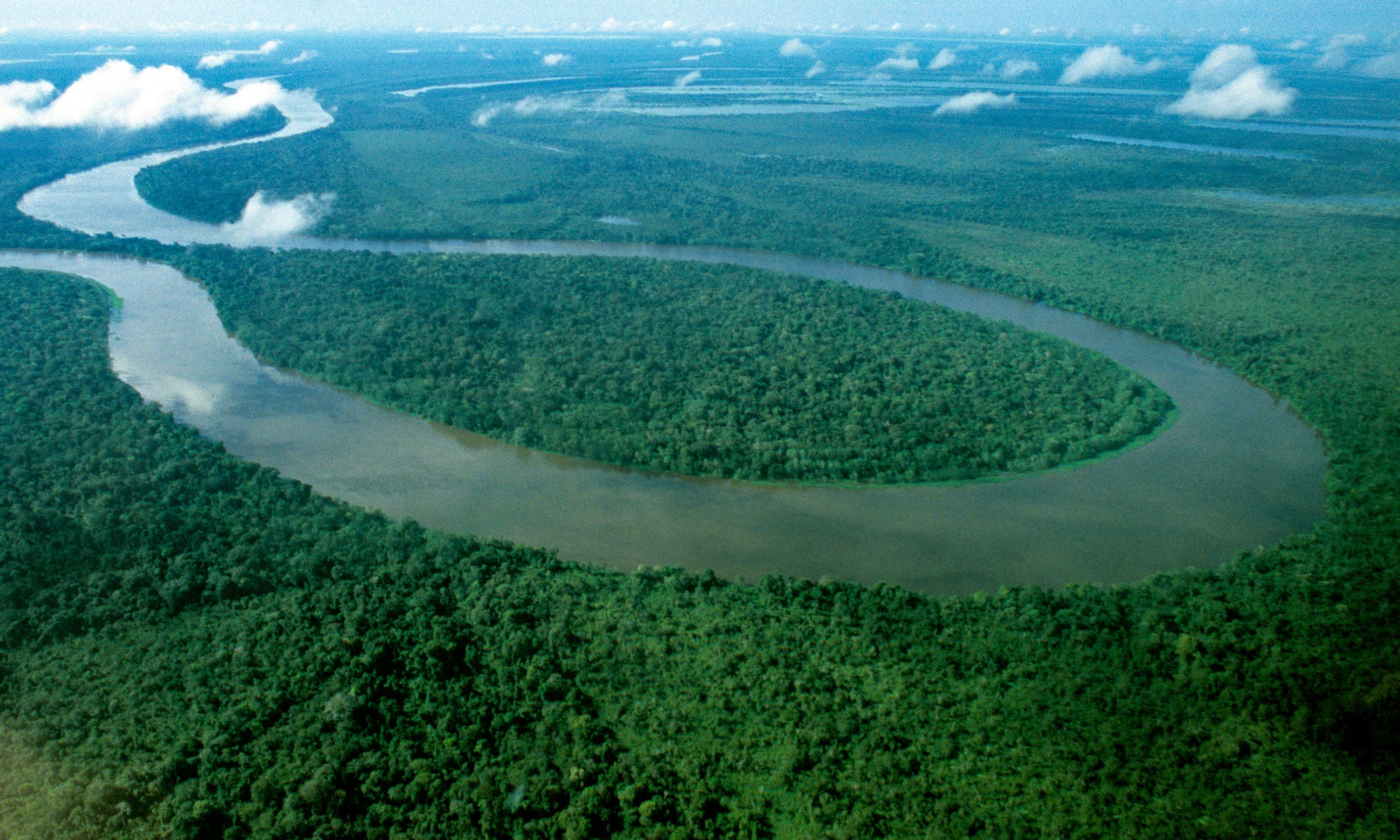 Shell boss says mass reforestation needed to limit temperature rises to 1.5C