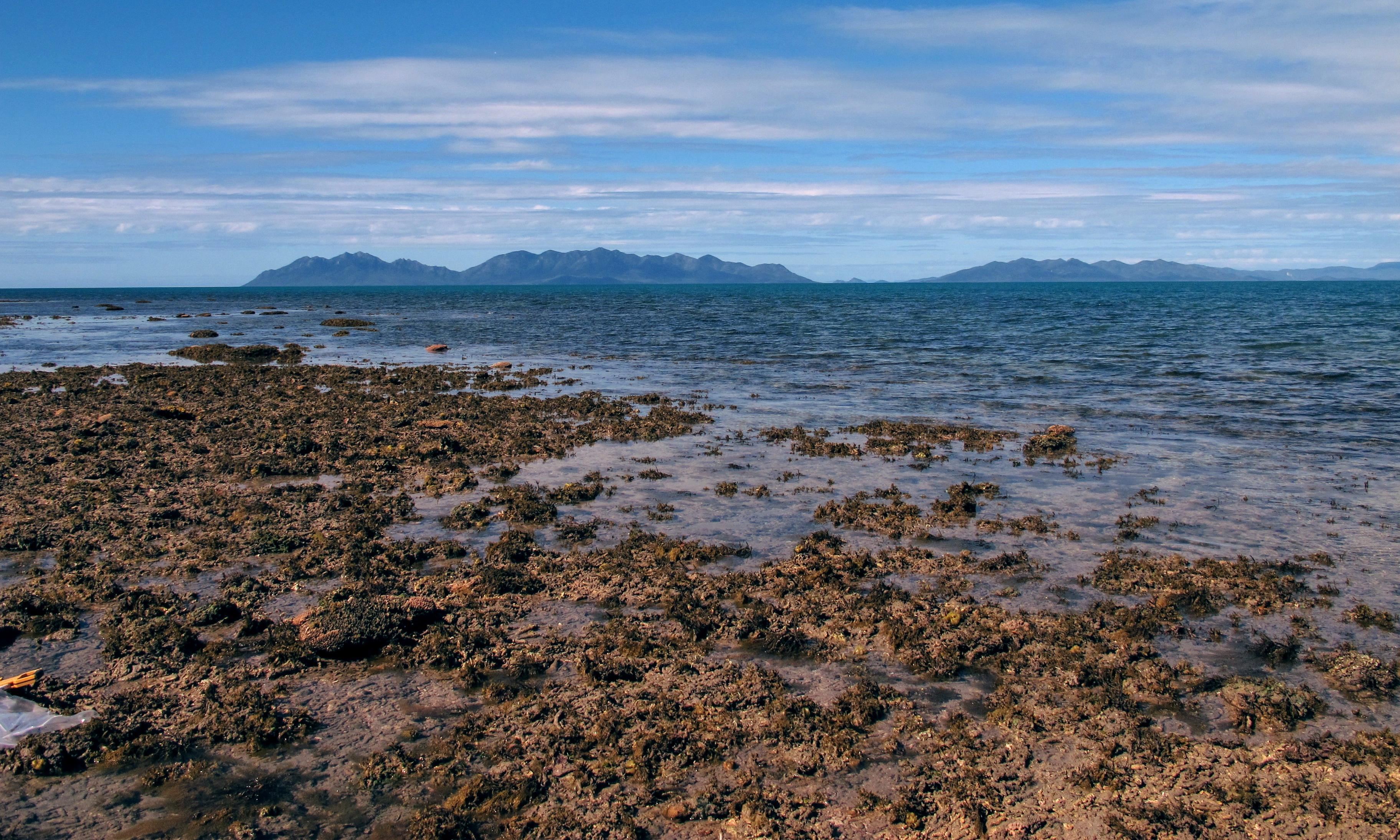 Scientist says rightwing thinktank misrepresented her Great Barrier Reef study