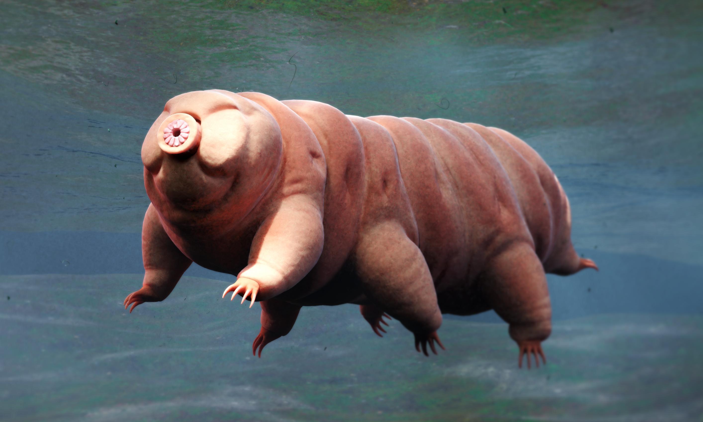Tiny but tough: the tardigrades