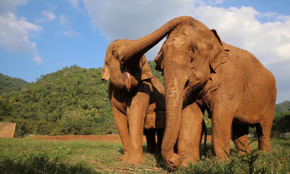 Elephant Nature Park, Chiang Mai.