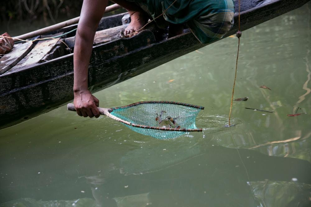 Moniral Islam Gazi crab fishing.