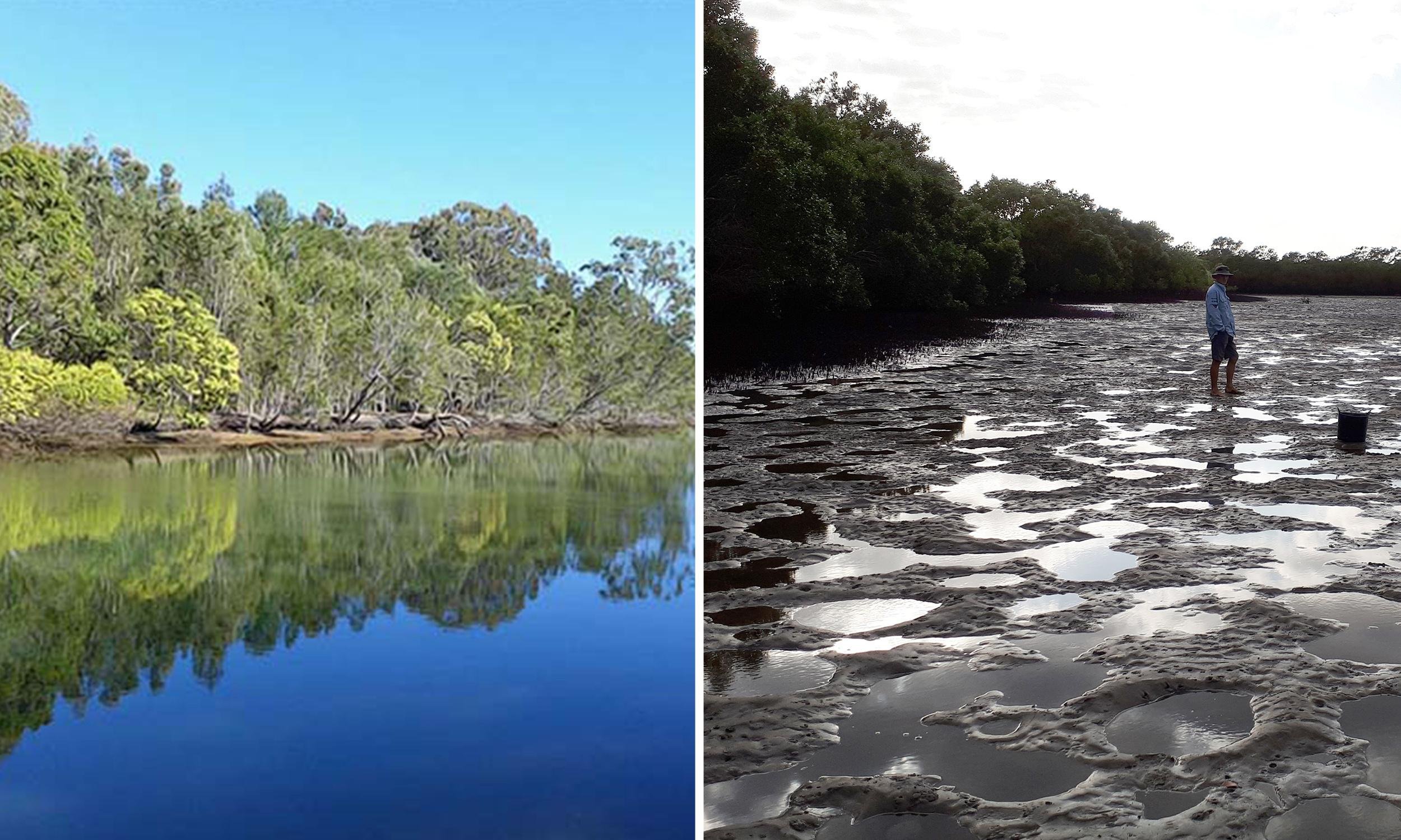 Contaminated water from Gold Coast luxury estate adds to wetland 'catastrophe'