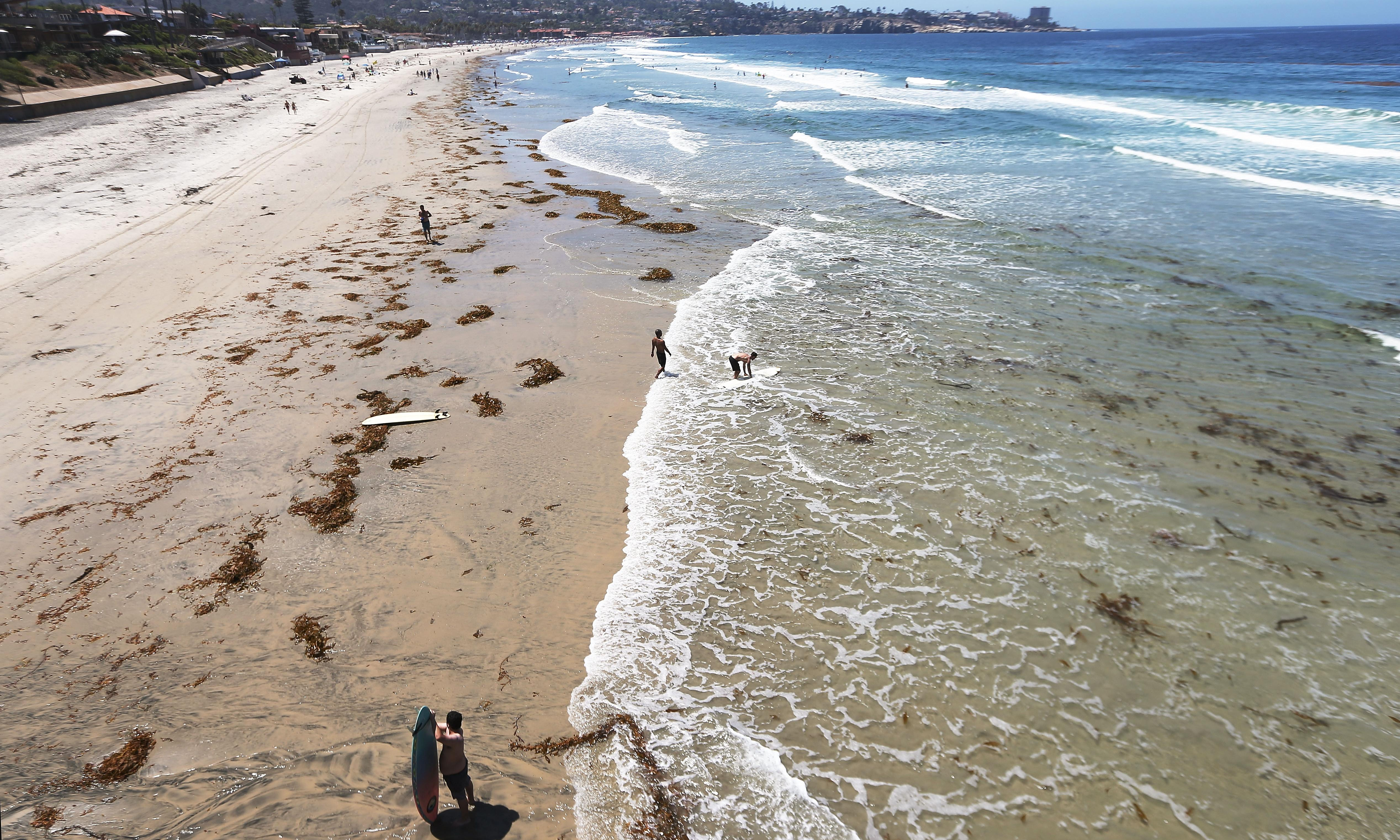 Sea life in 'peril' as ocean temperatures hit all-time high in San Diego