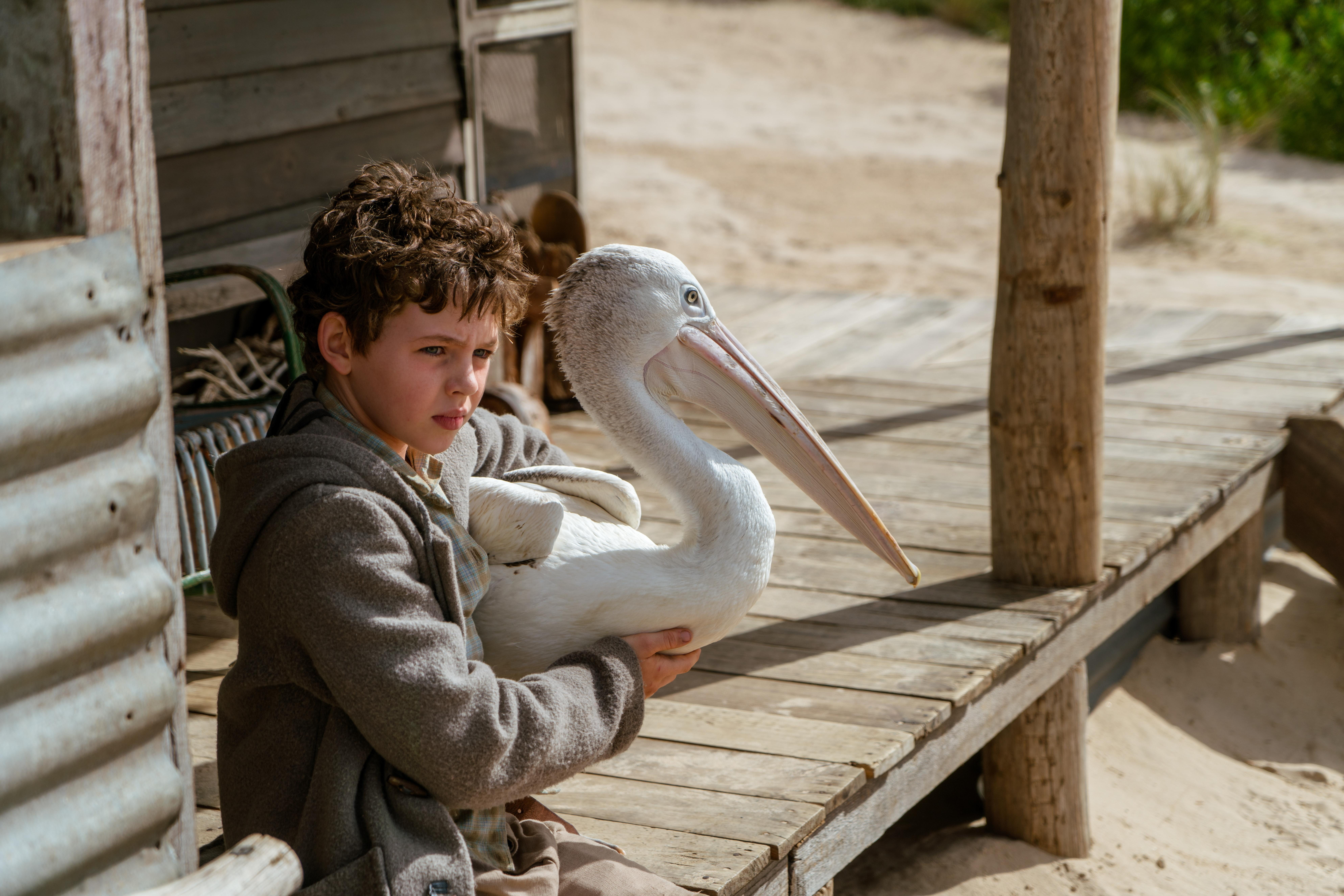 Storm Boy review – not even a beloved pelican can save this epic downer