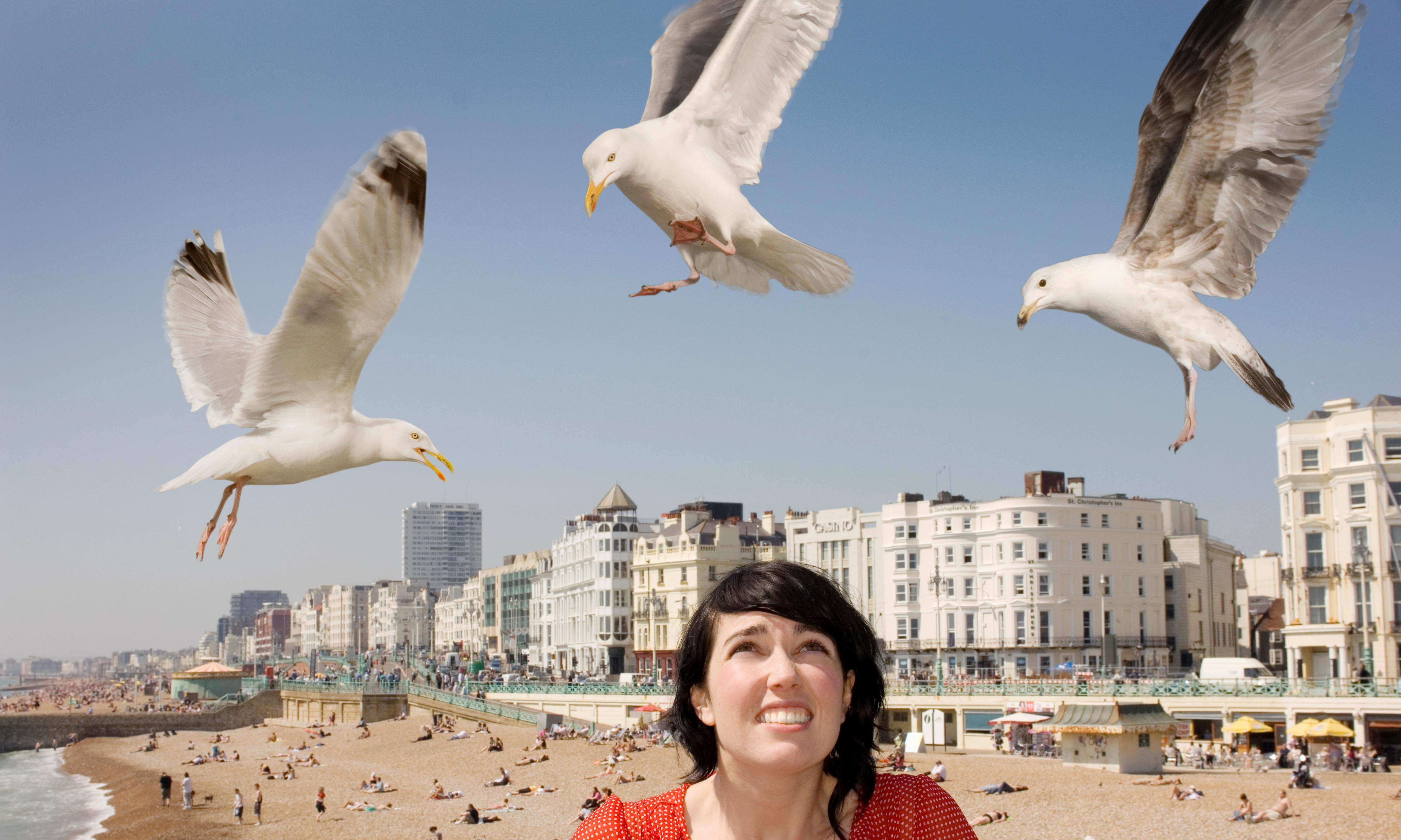 Beware the risks if you do stare down a seagull – it may lead to love