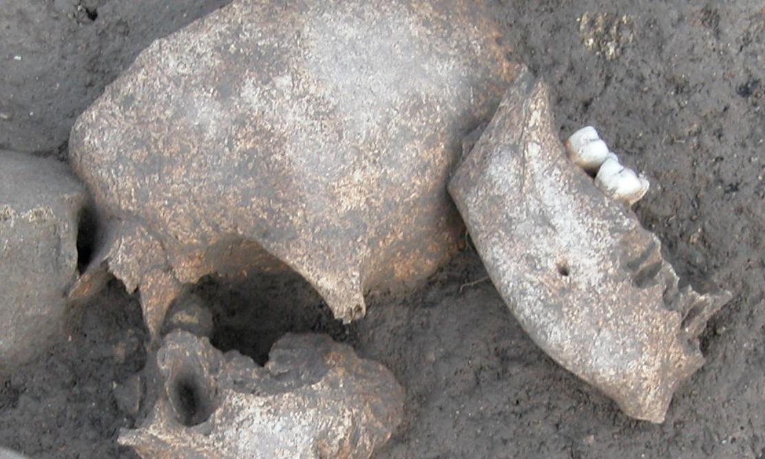 The Gauls really did embalm the severed heads of enemies, research shows