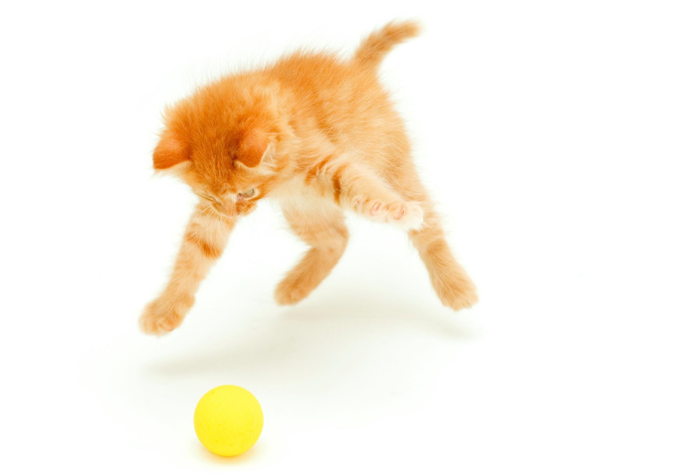 What links gossima, battledore and kitten ball? The Weekend quiz