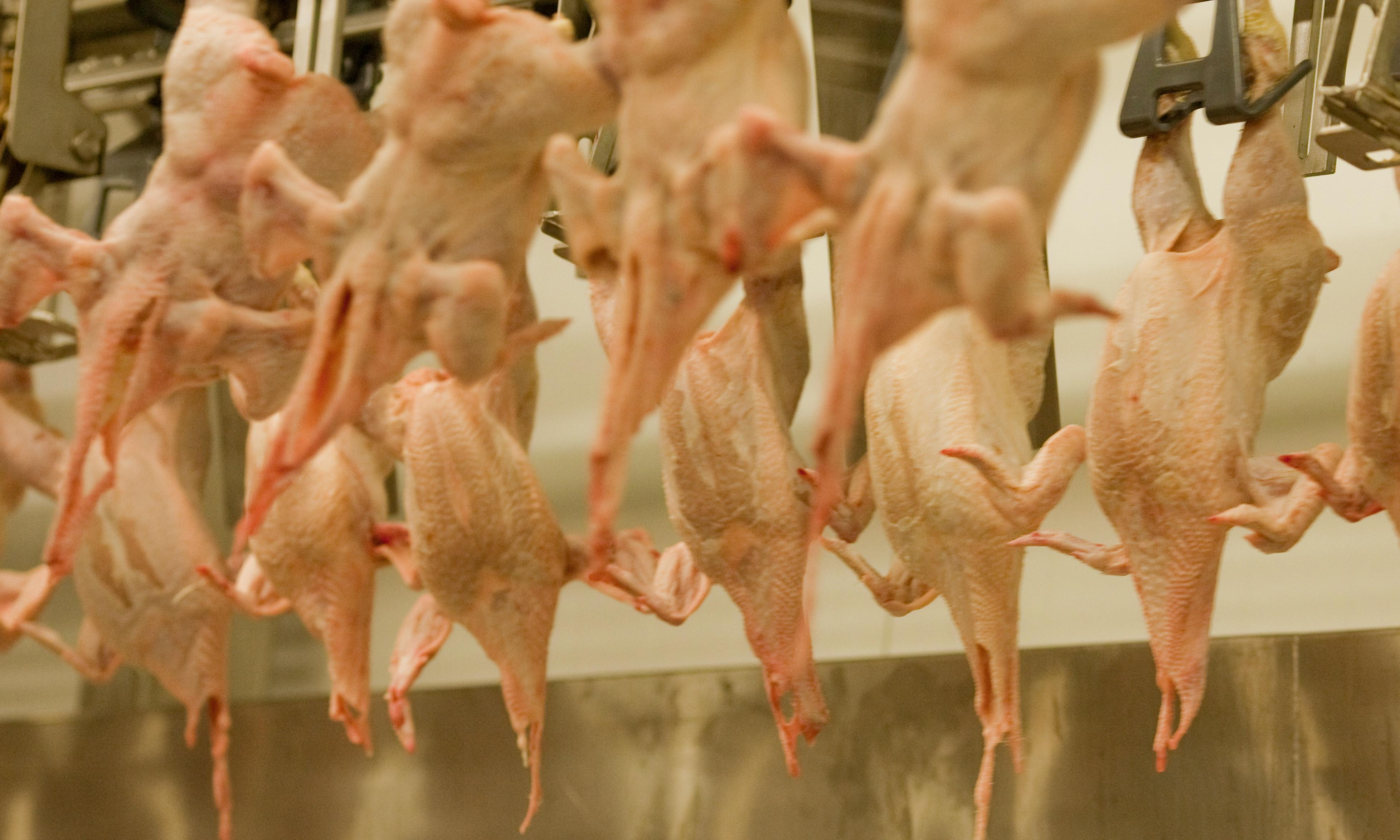 EU plan to reduce checks on chickens 'will increase food poisoning risk'