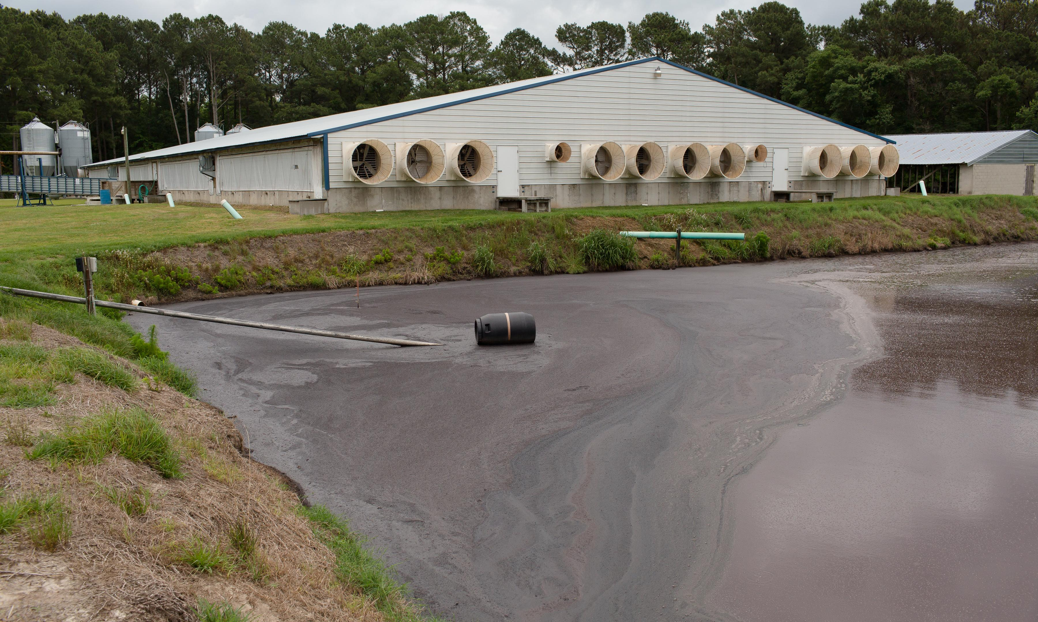 Factory farms are polluting our water with hog manure. Democrats should take note