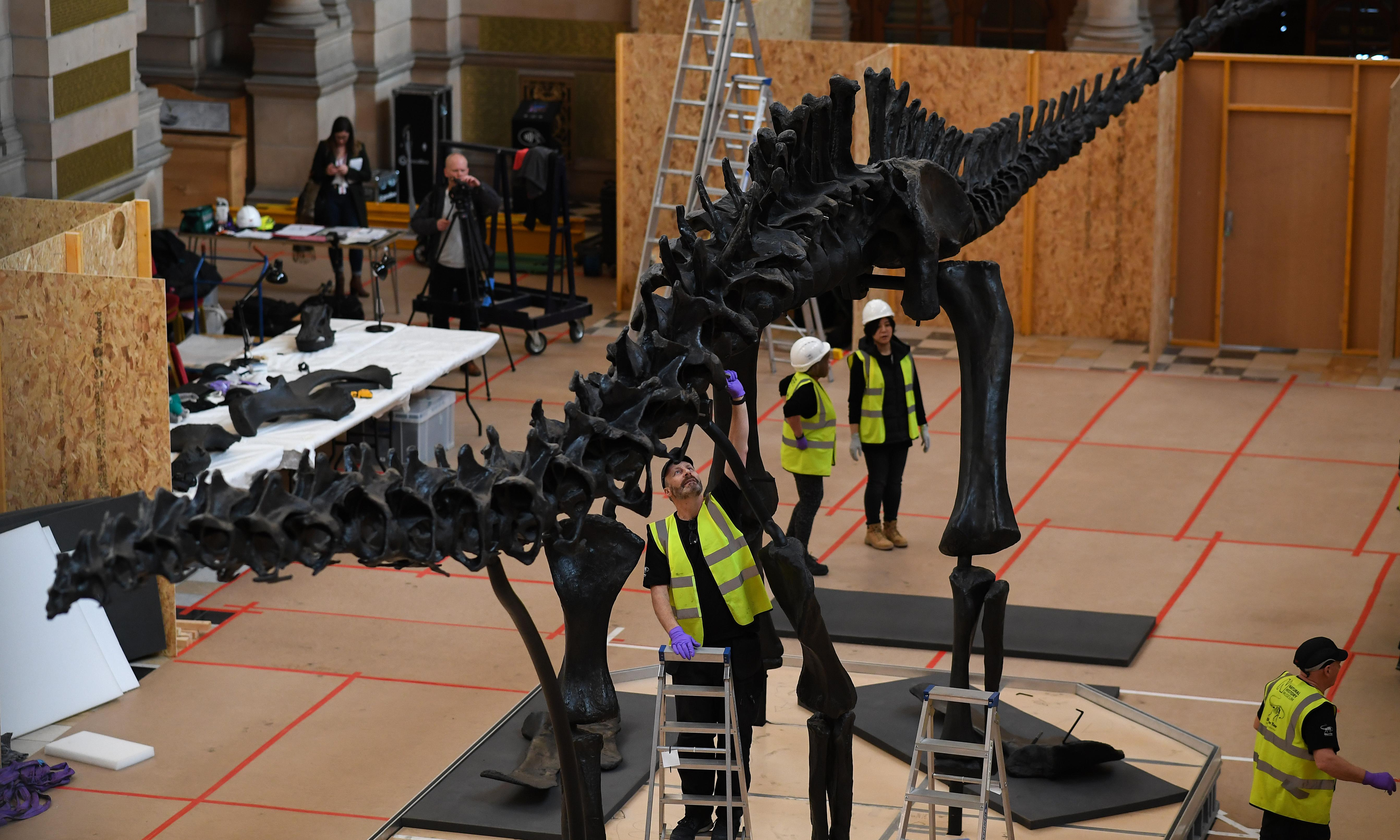 Natural History Museum dinosaur Dippy lands in Glasgow