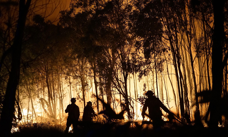 'Like opening a fan oven': Australia's rainforest threatened by bushfires