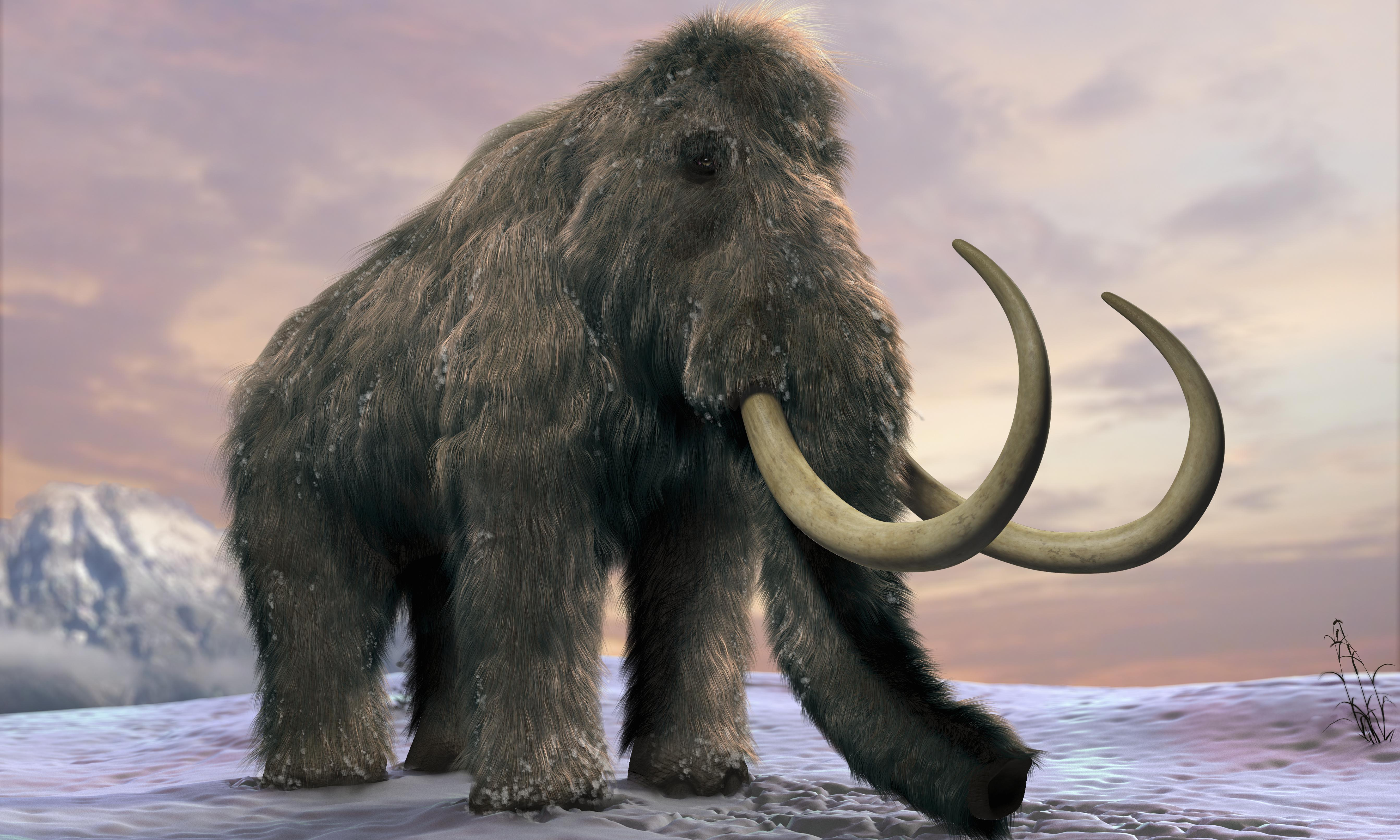 A mammoth, woolly rhino and a medieval village: the unexpected treasures beneath the A14