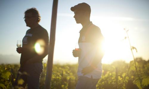 Wine Calling review – woozy salute to France's natural wine movement
