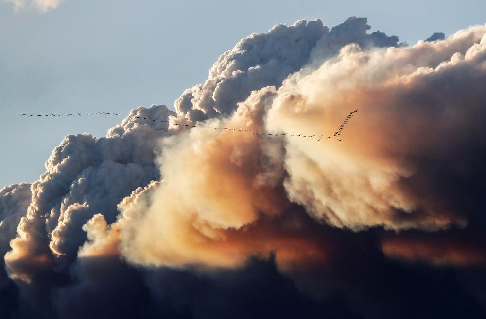 When it comes to the effect of wildfire smoke on birds, 'there is still a lot we don't know', says scientist Rodney Siegel.