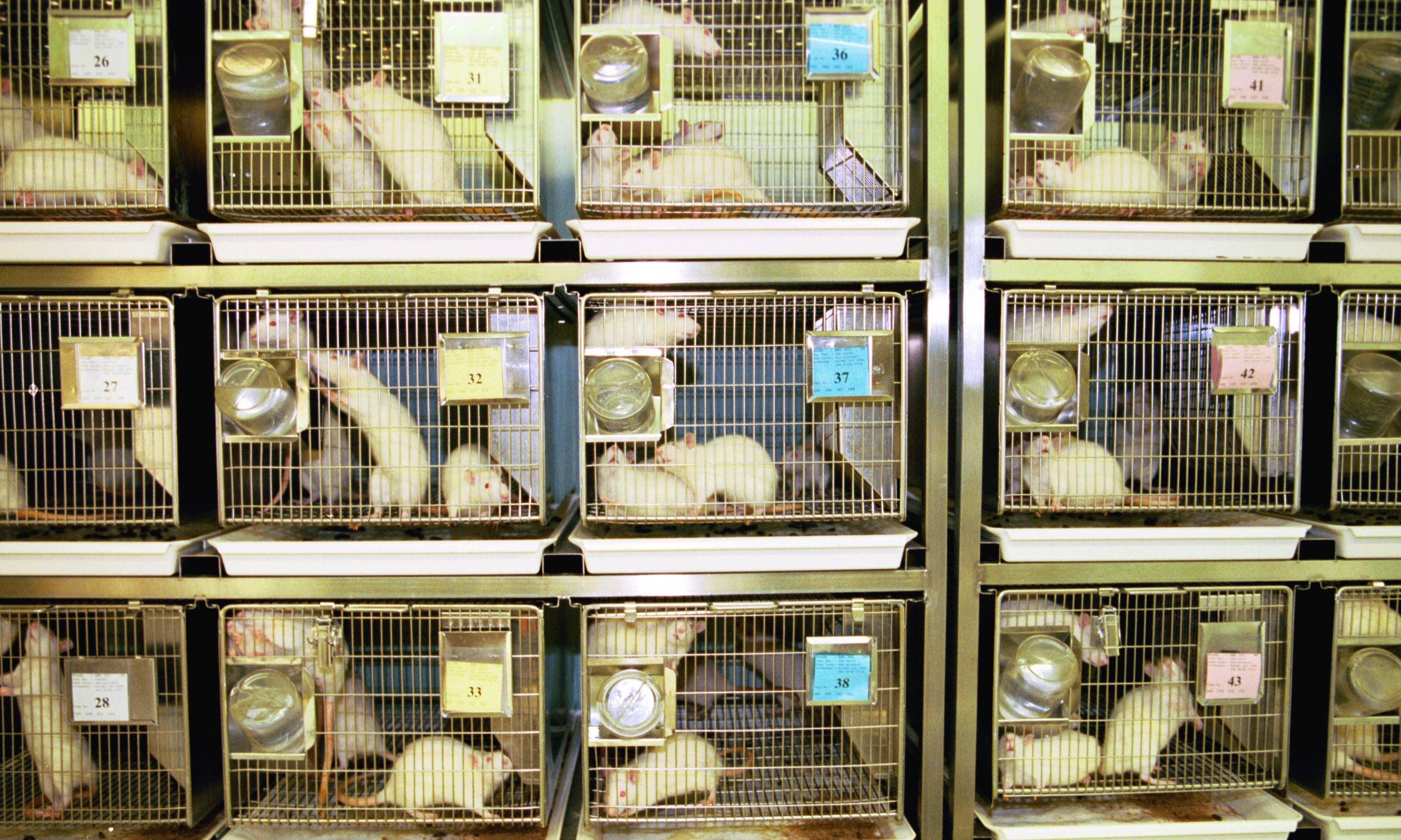 UK mouse genetics centre faces closure threatening research